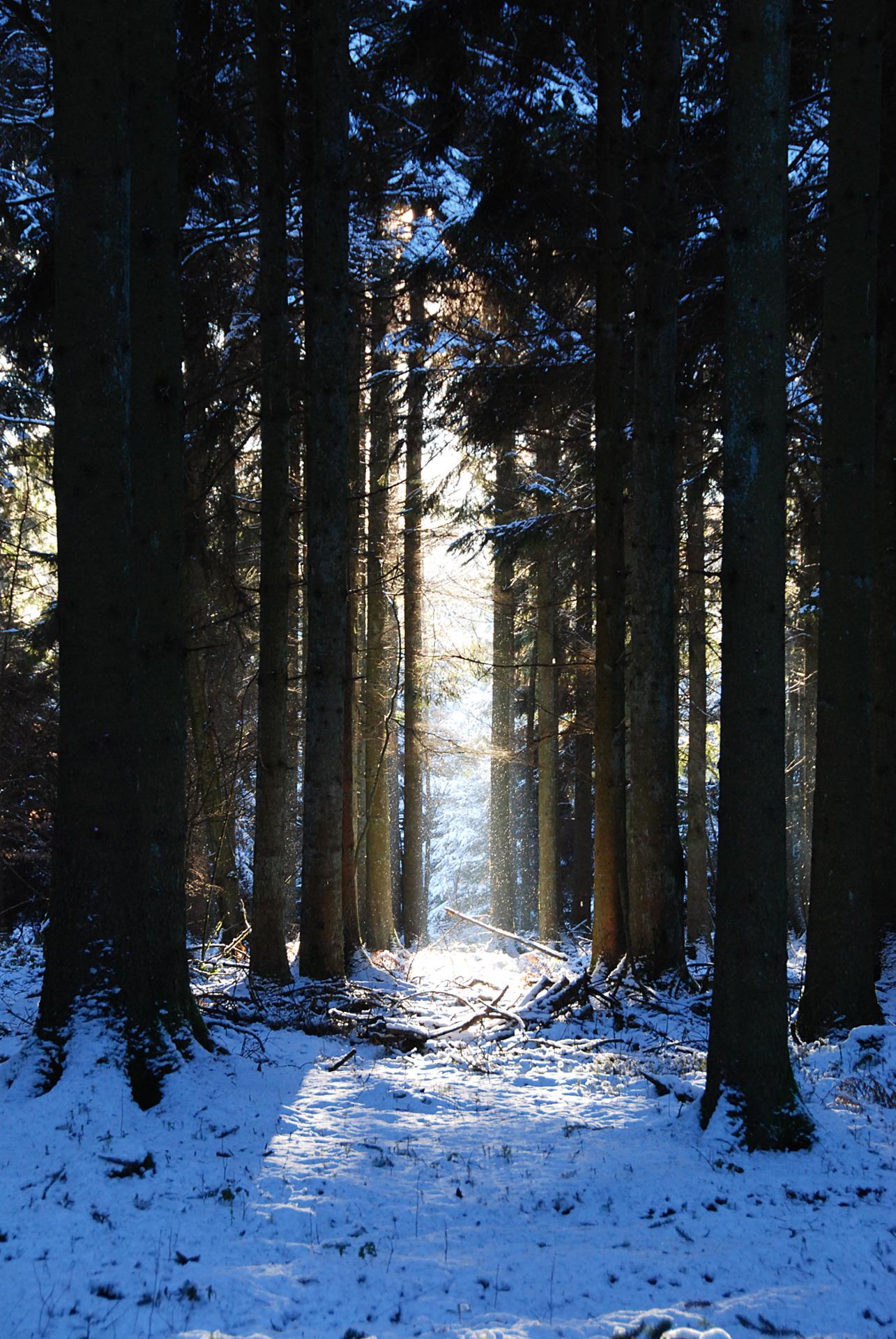 Bienvenue à Narnia