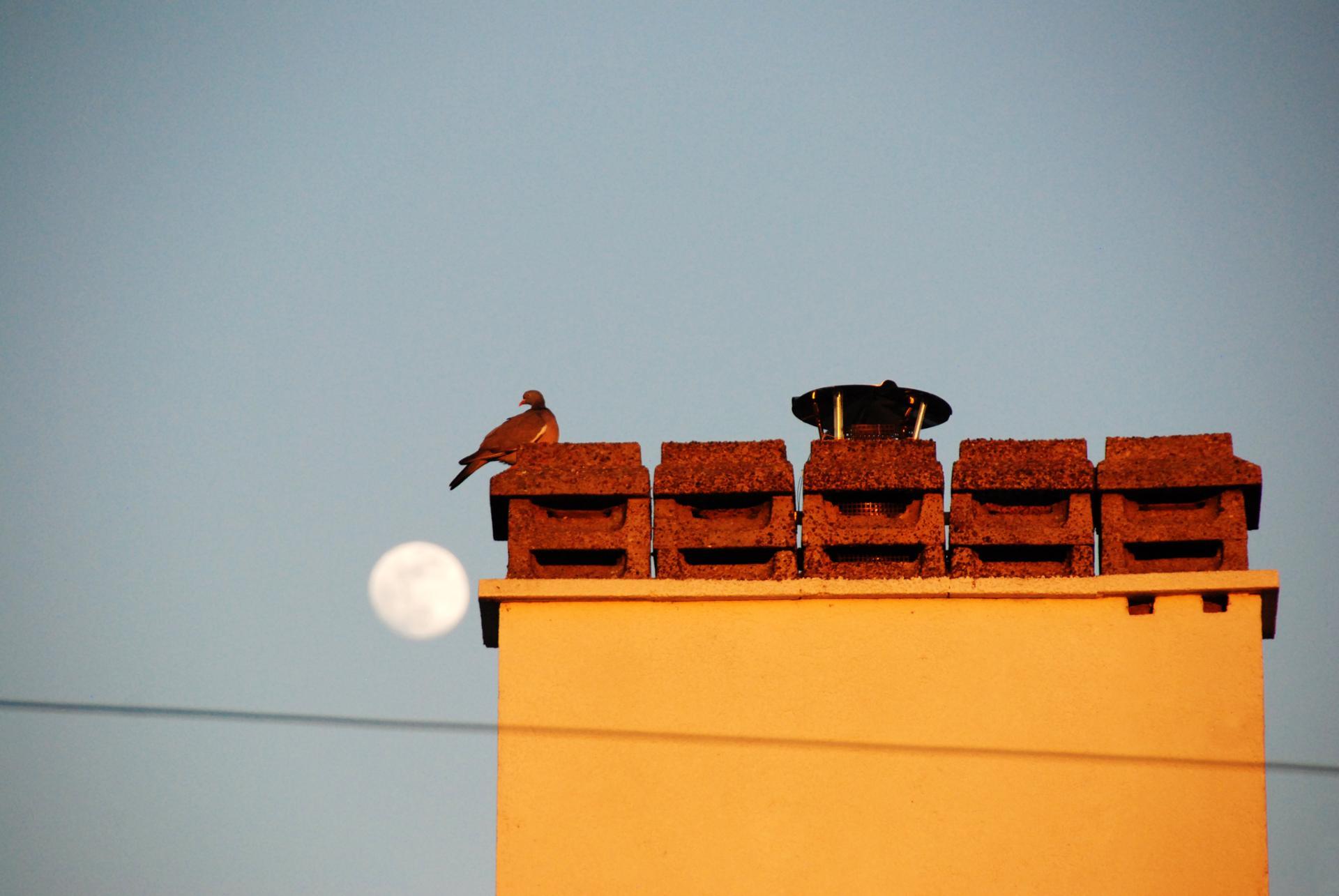 Moon Bird