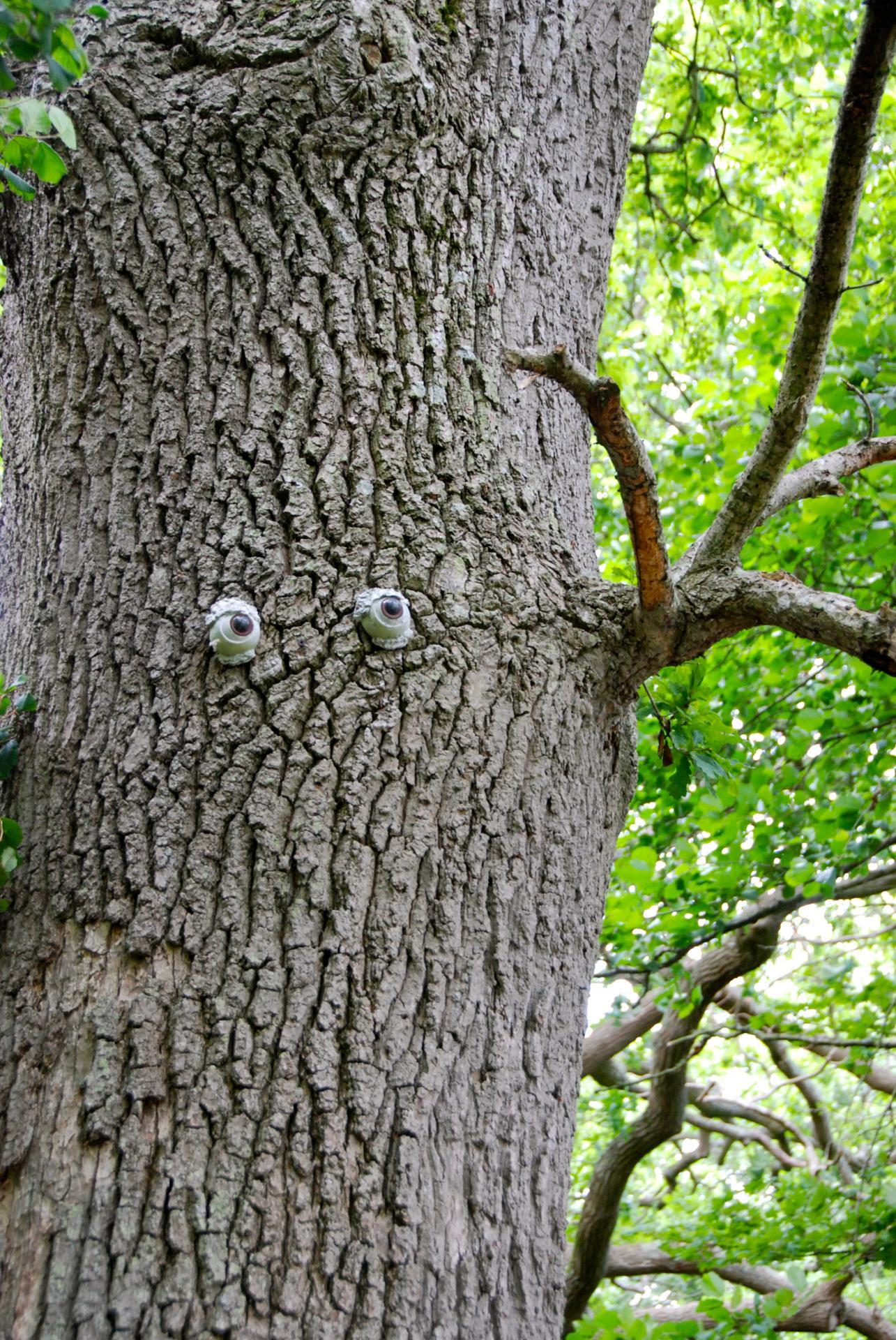 Look on a tree