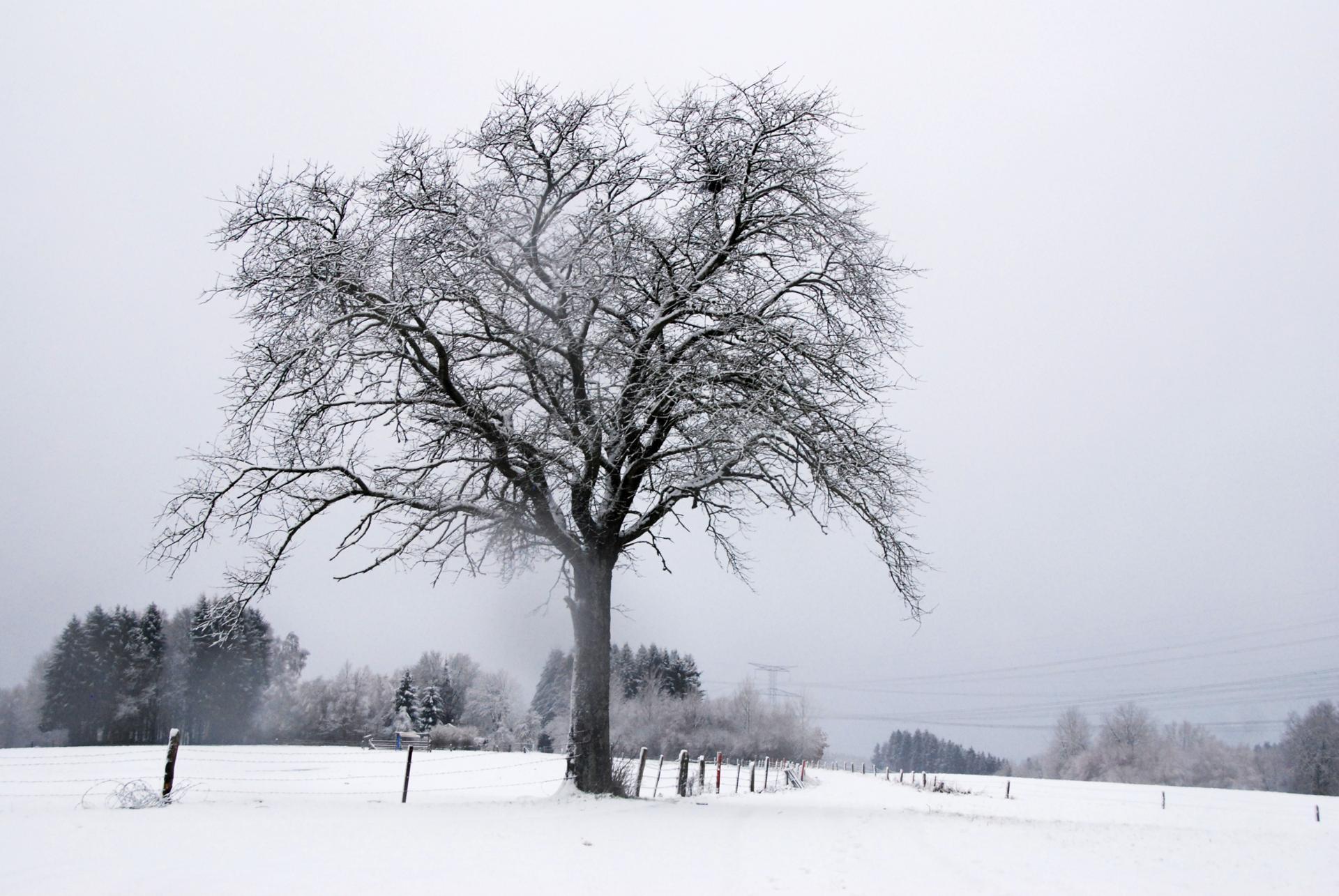 Solitude glacée