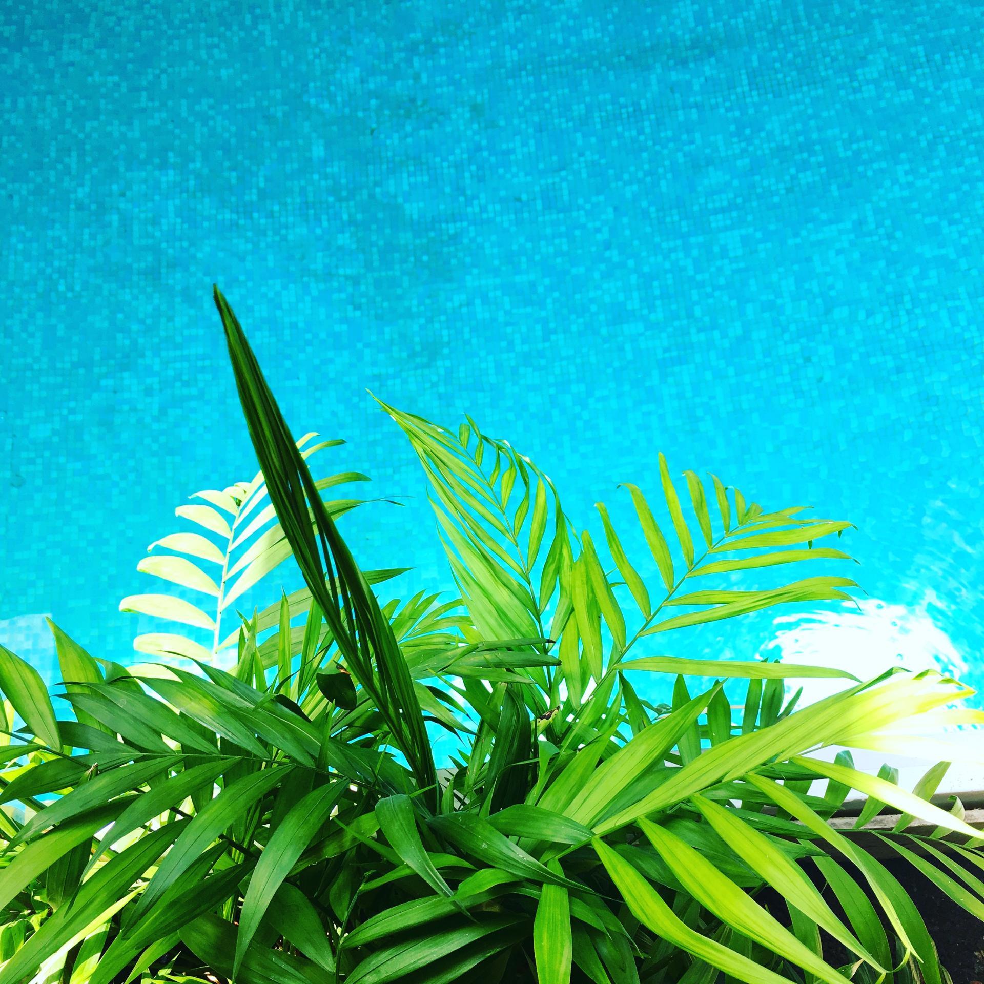 Mi-plante Mi-Piscine
