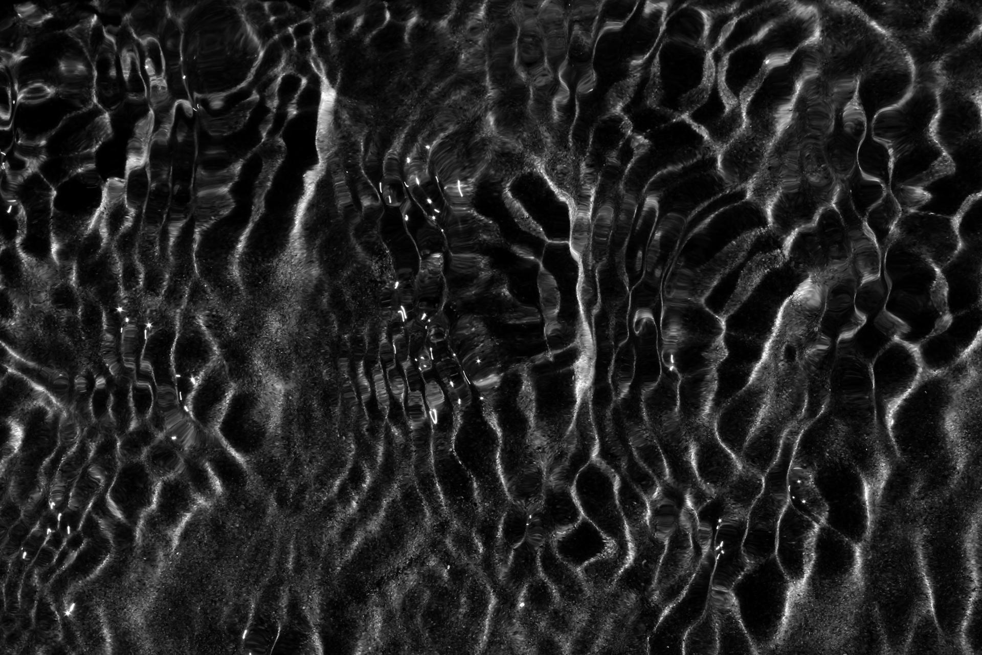 eau zebra