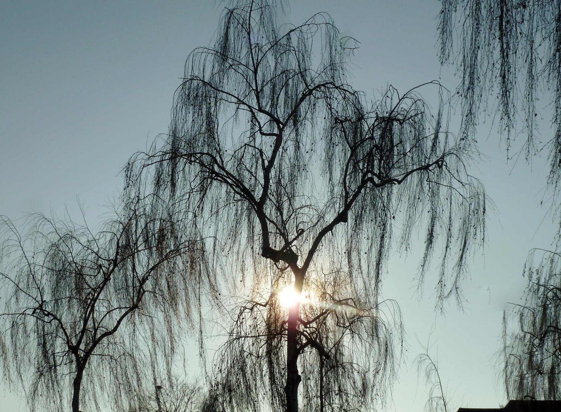Soleil de Strasbourg