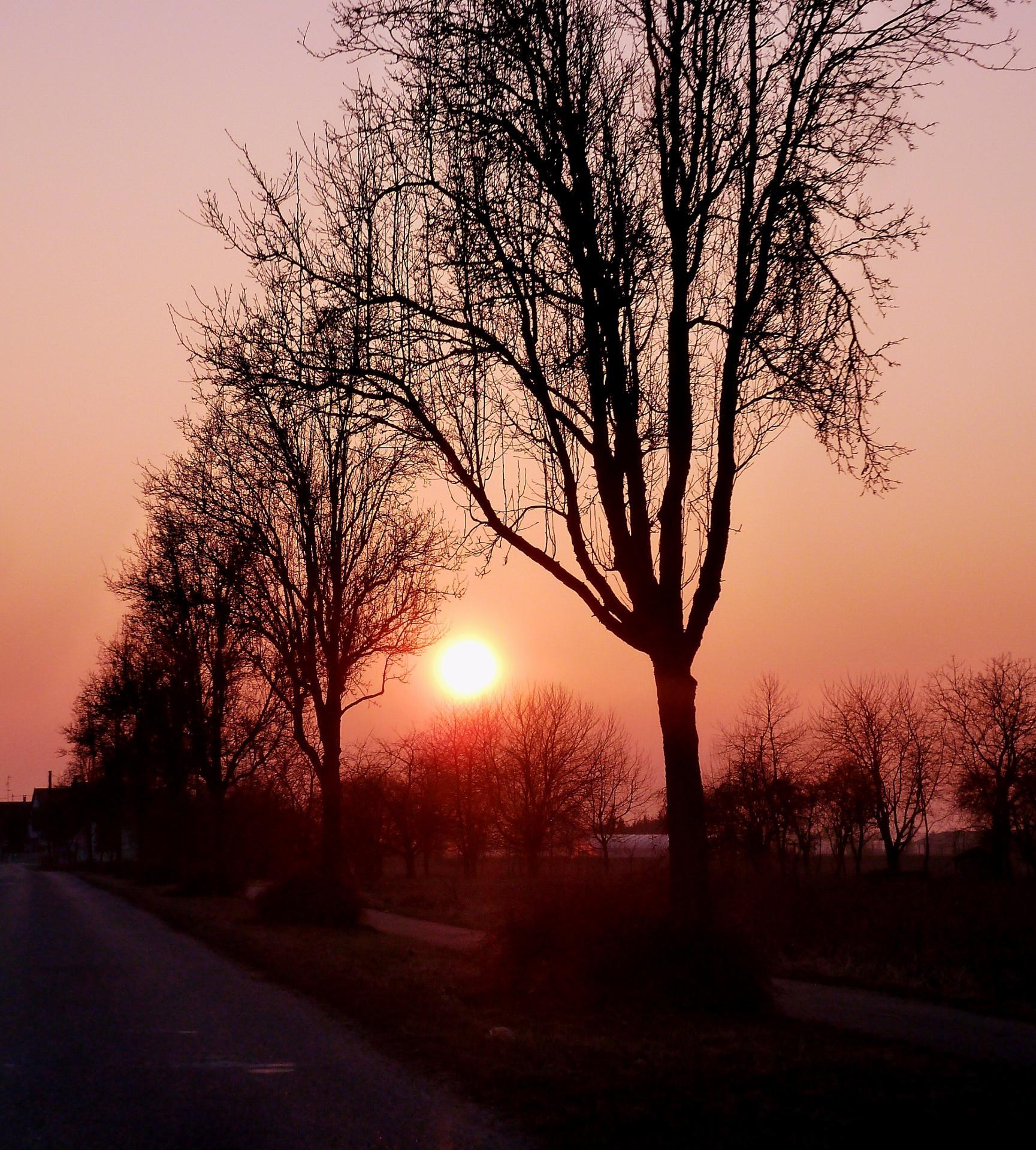 Entre deux arbres