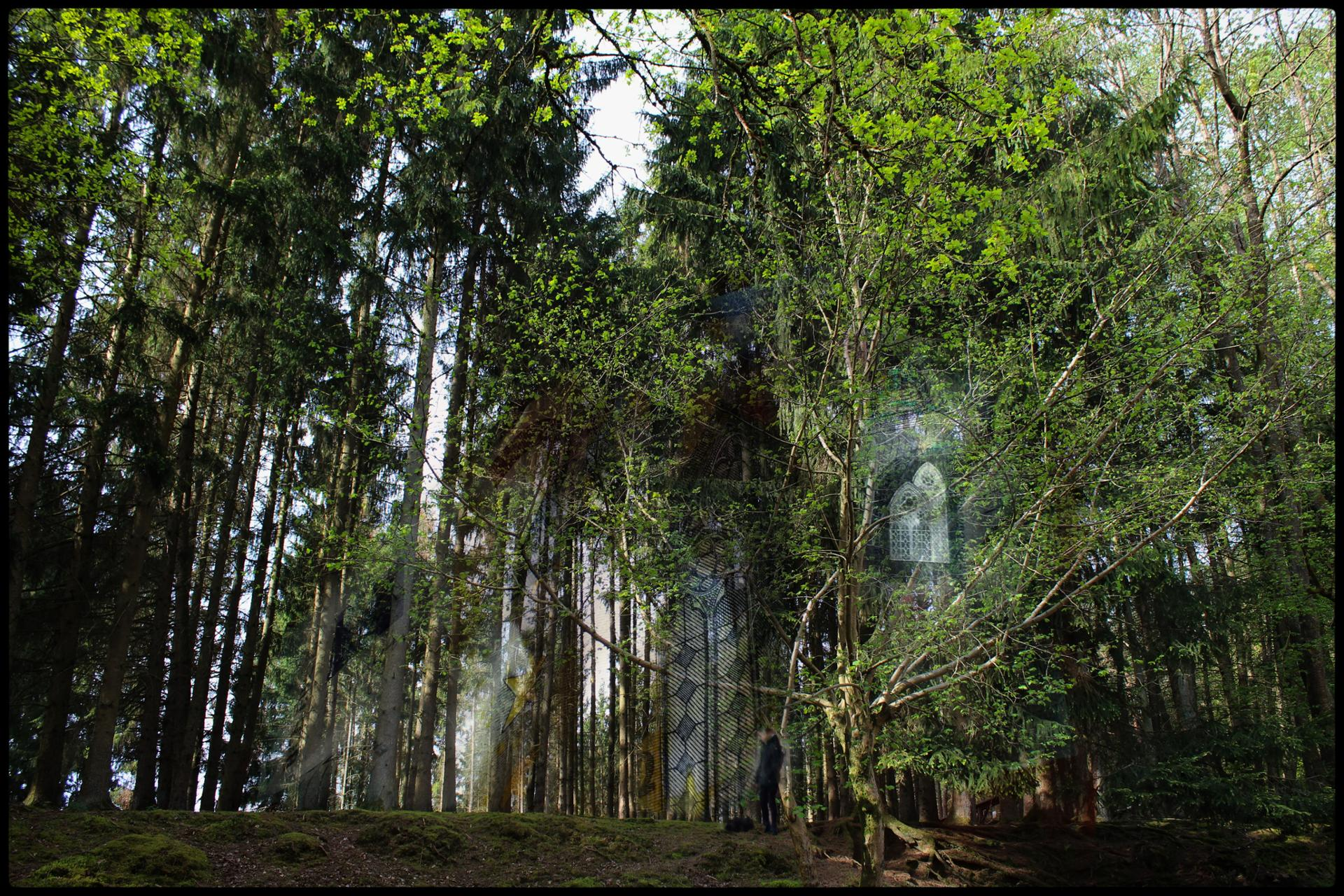 Etoile dans la forêt