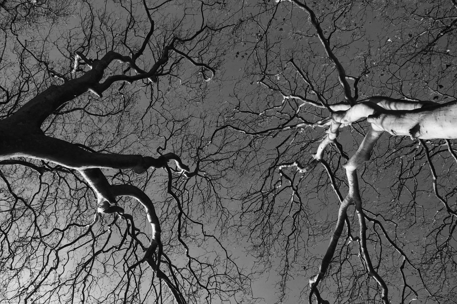 Au bout des branches