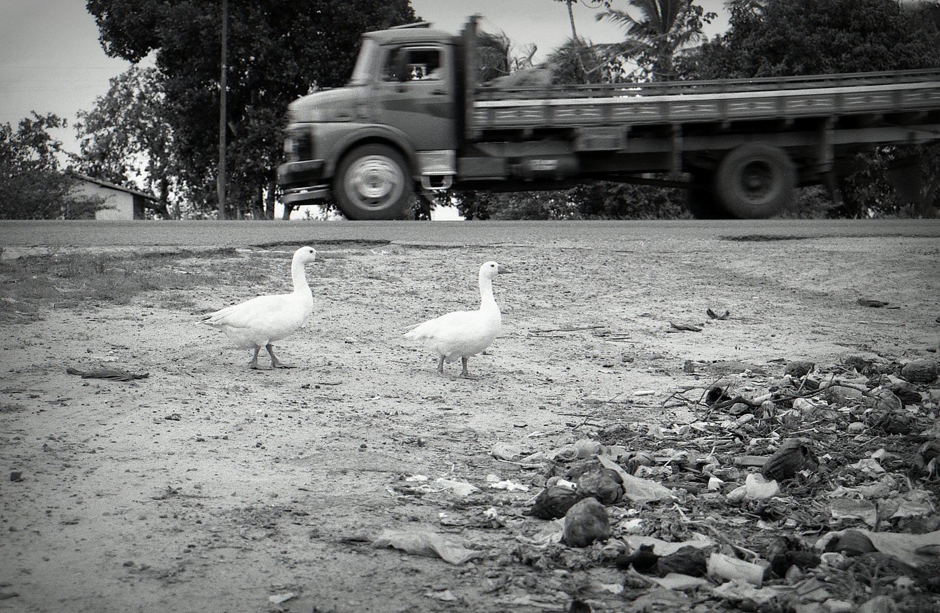 autour du Corcovado 6.jpg