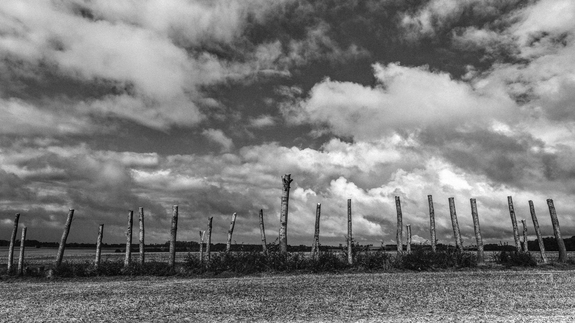 Le cimetière des arbres