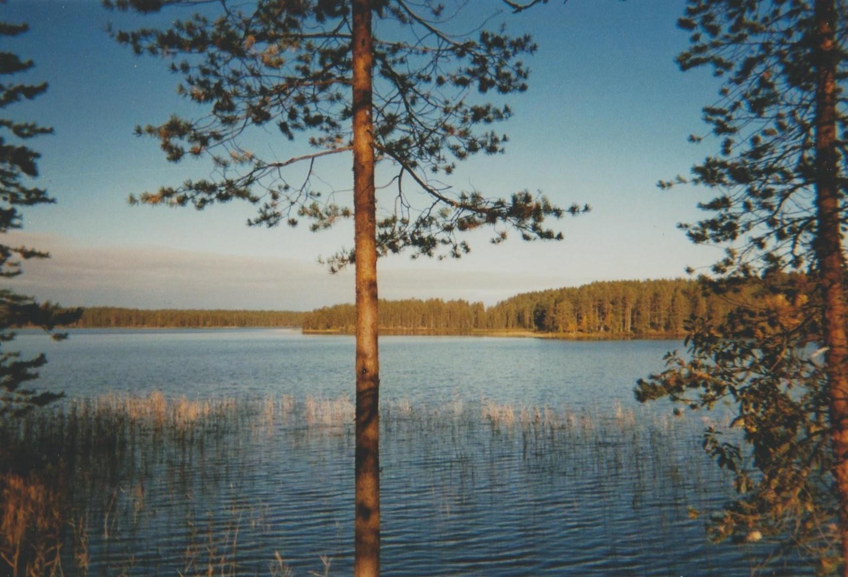 finnish tree