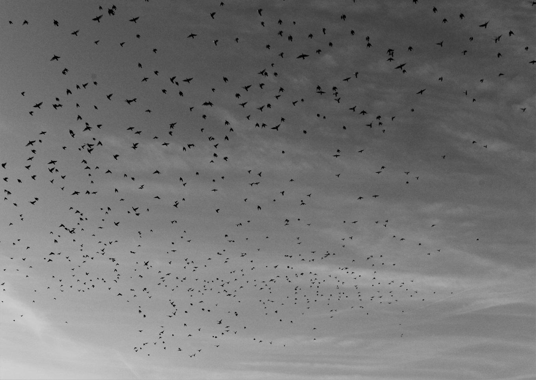 les oiseaux....jpg