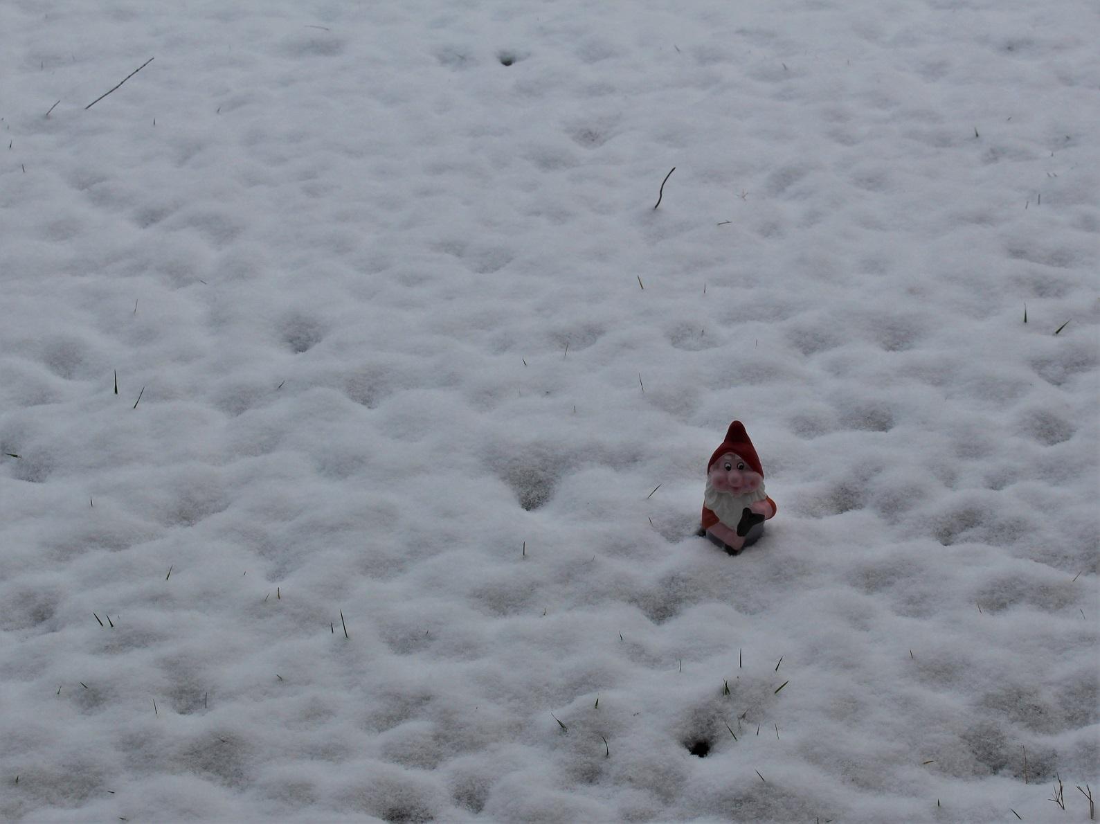 perdu dans la neige....JPG