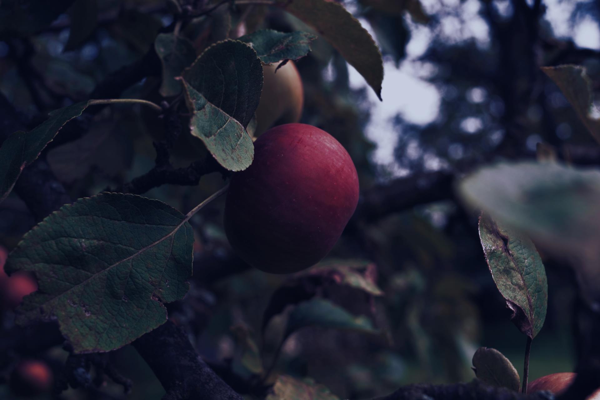 La pomme rouge.