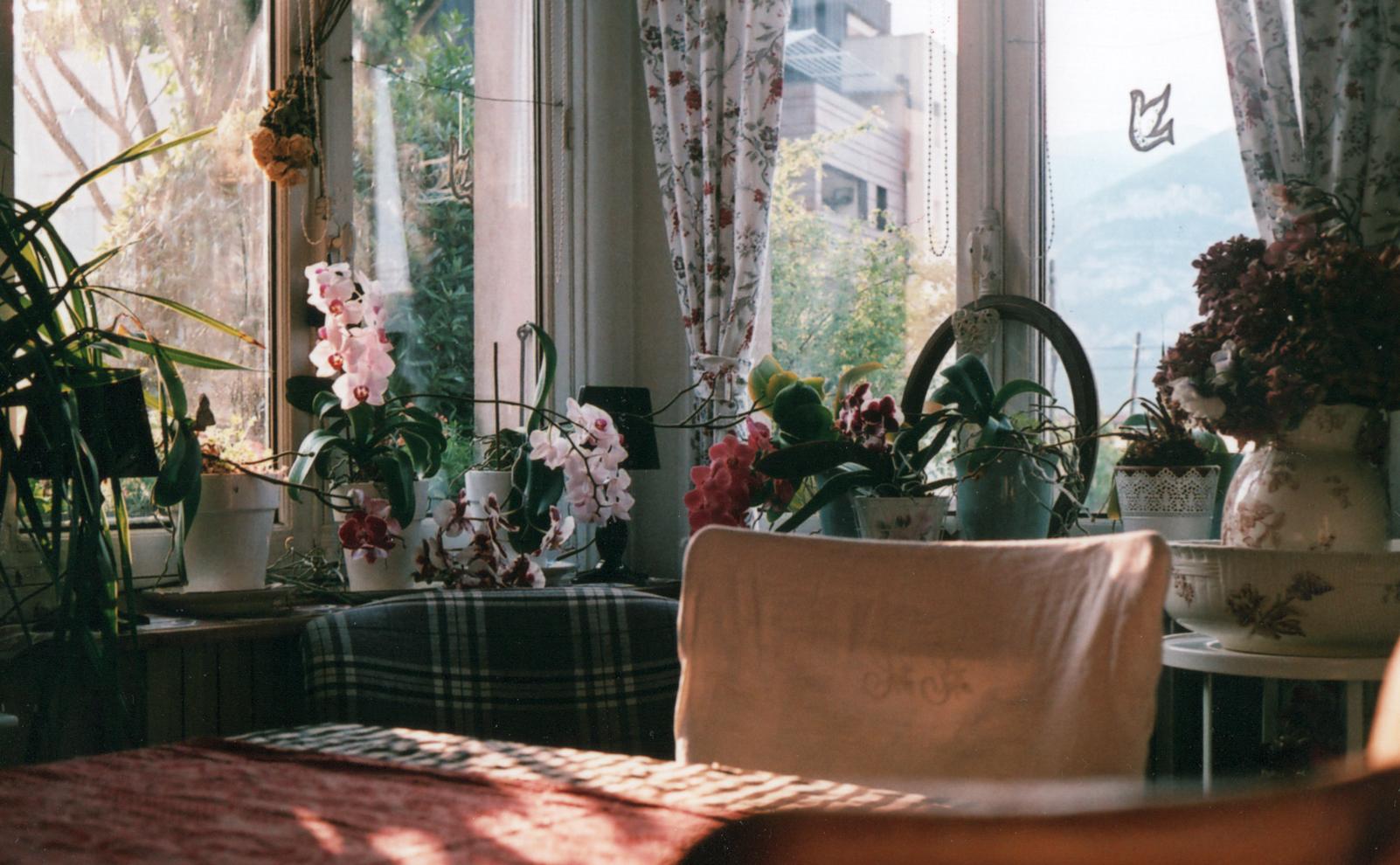 Intérieur aux Orchidées.