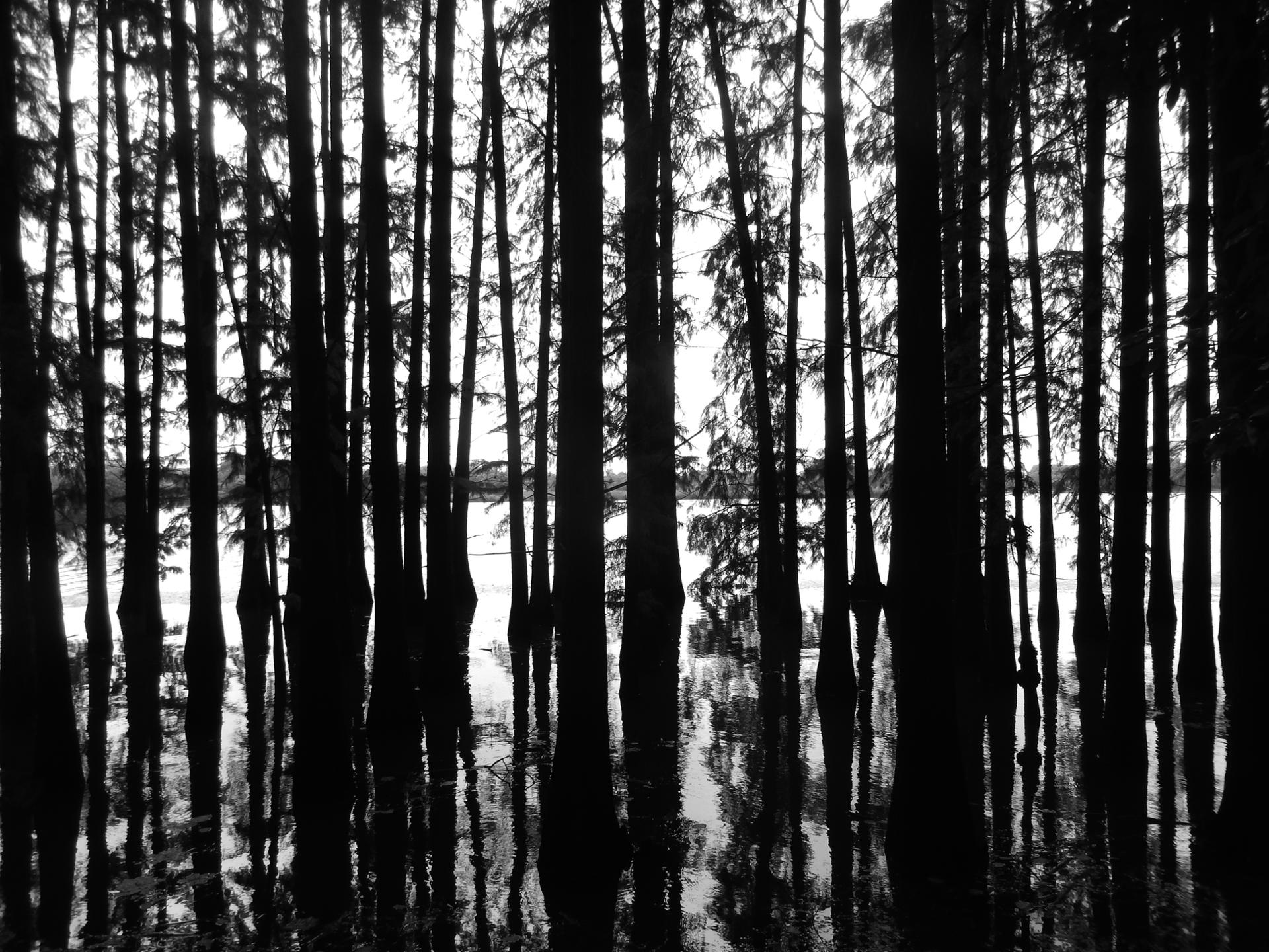 trees reflects