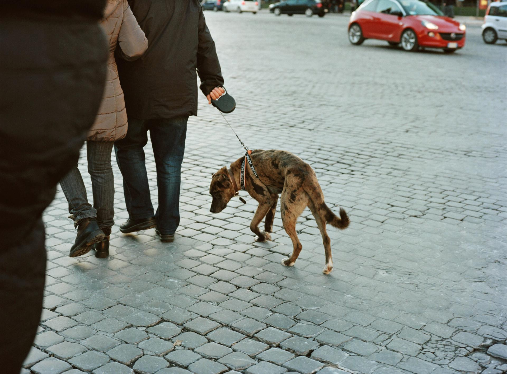Not in the mood for walking, Roma.
