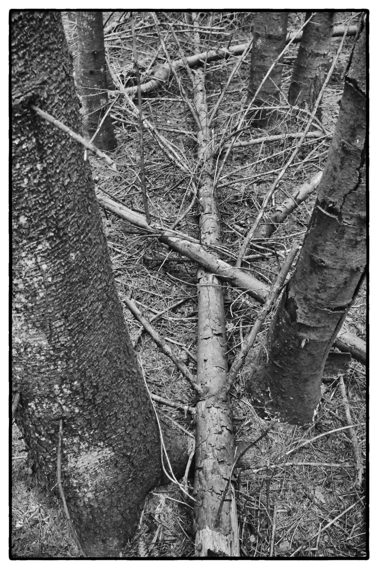 arbres 49
