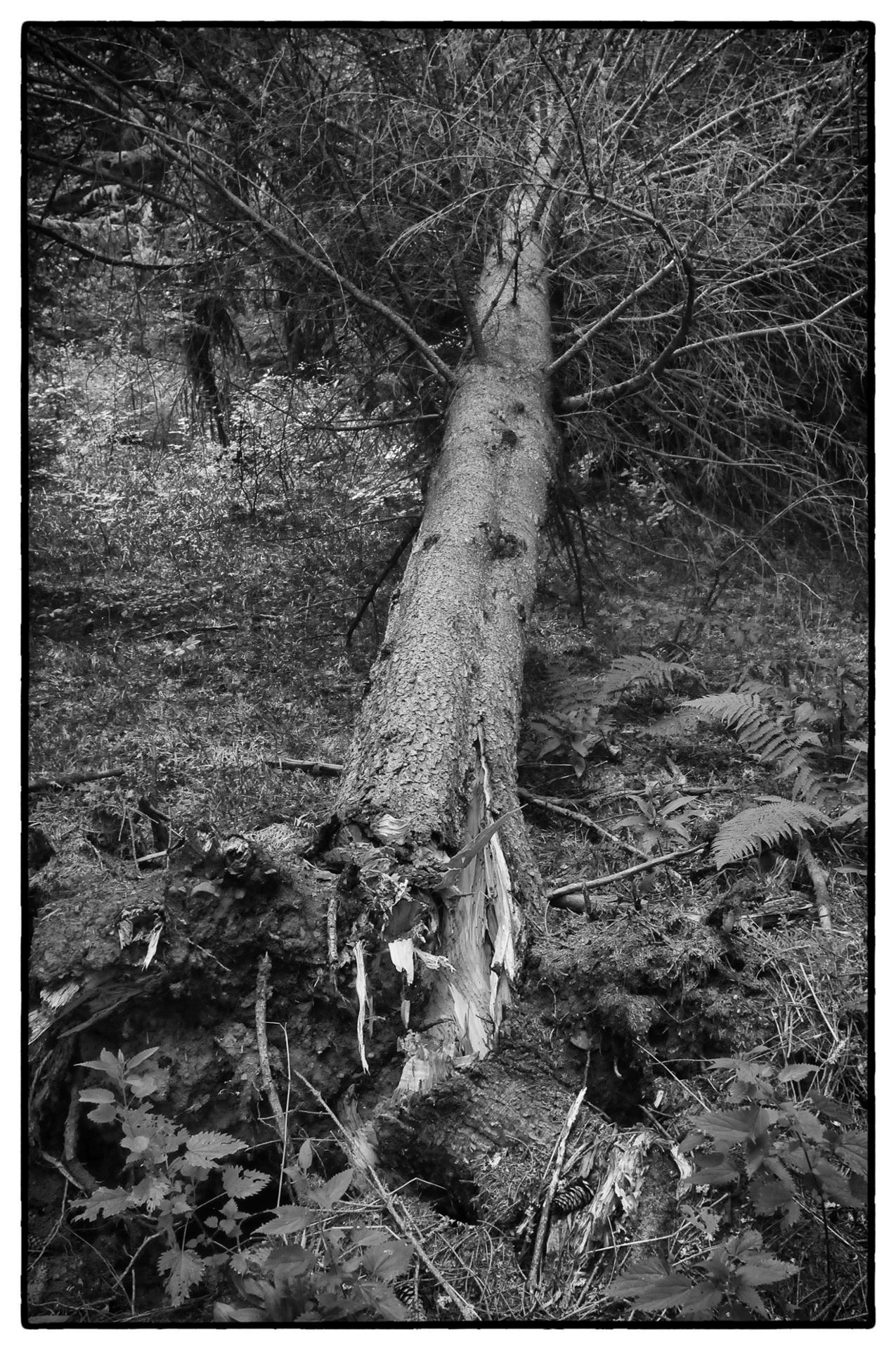 arbres 36