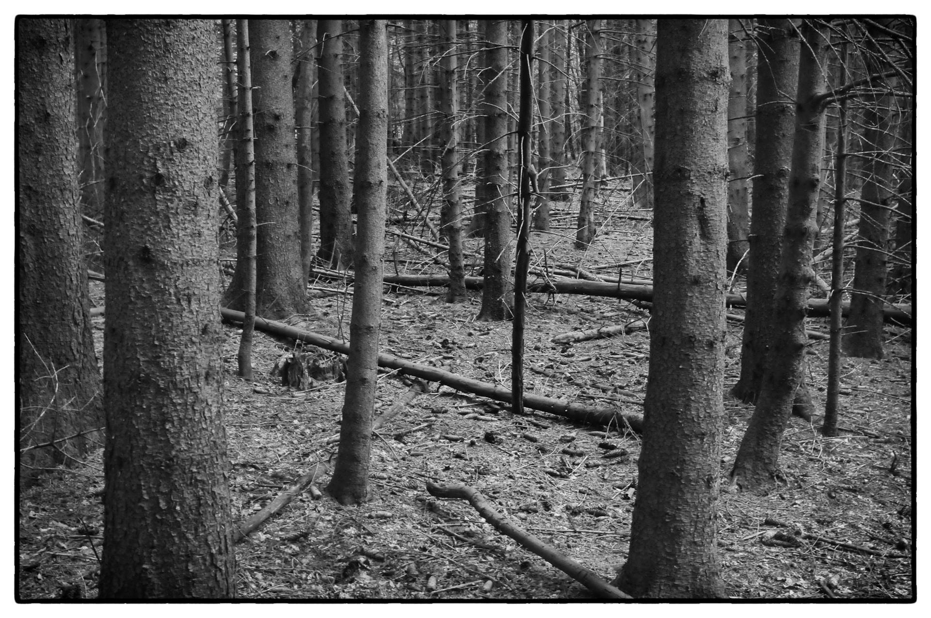 arbres 21