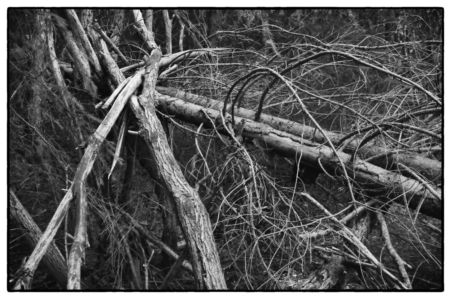 arbres 14