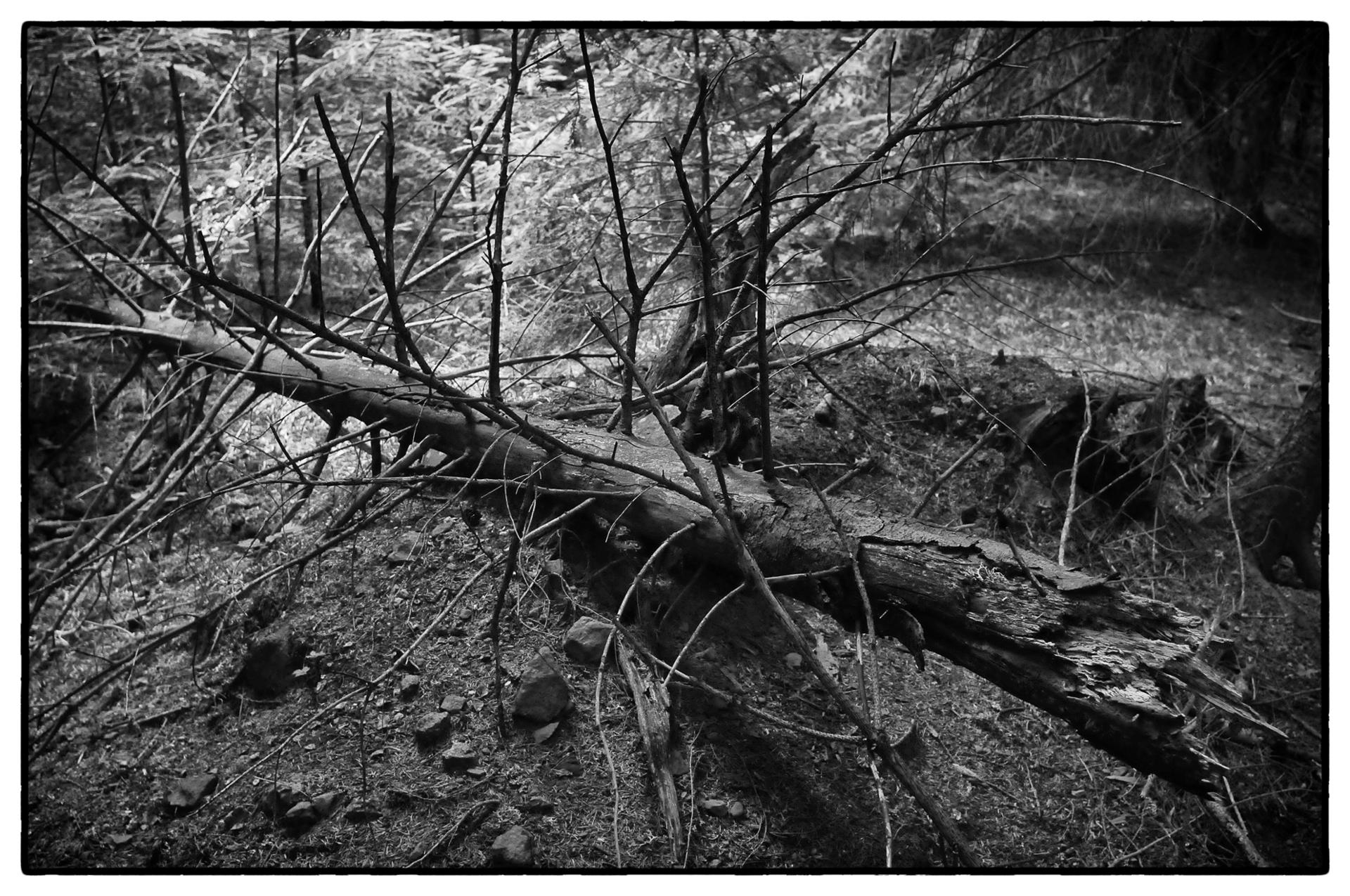 arbres 19