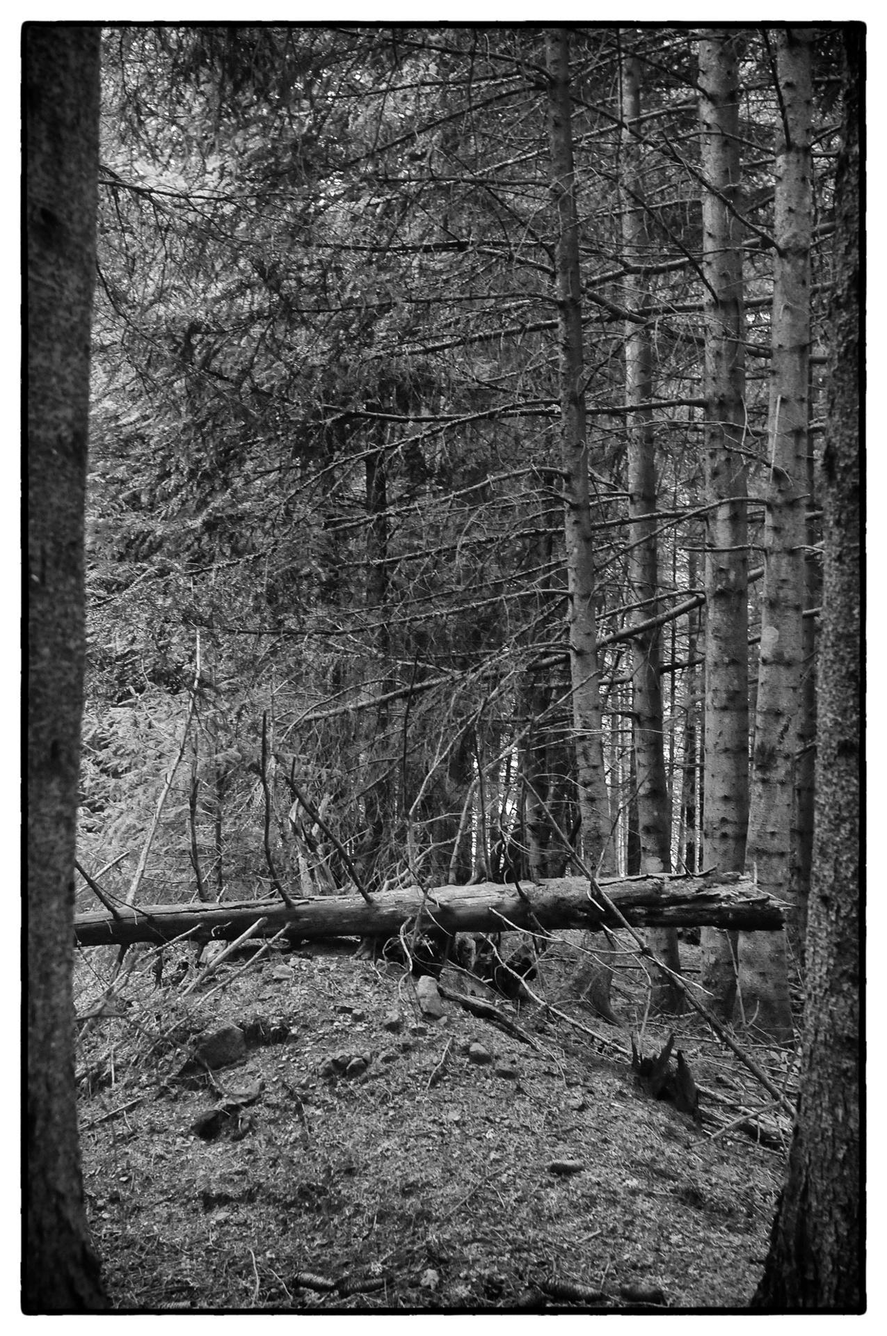 arbres 29