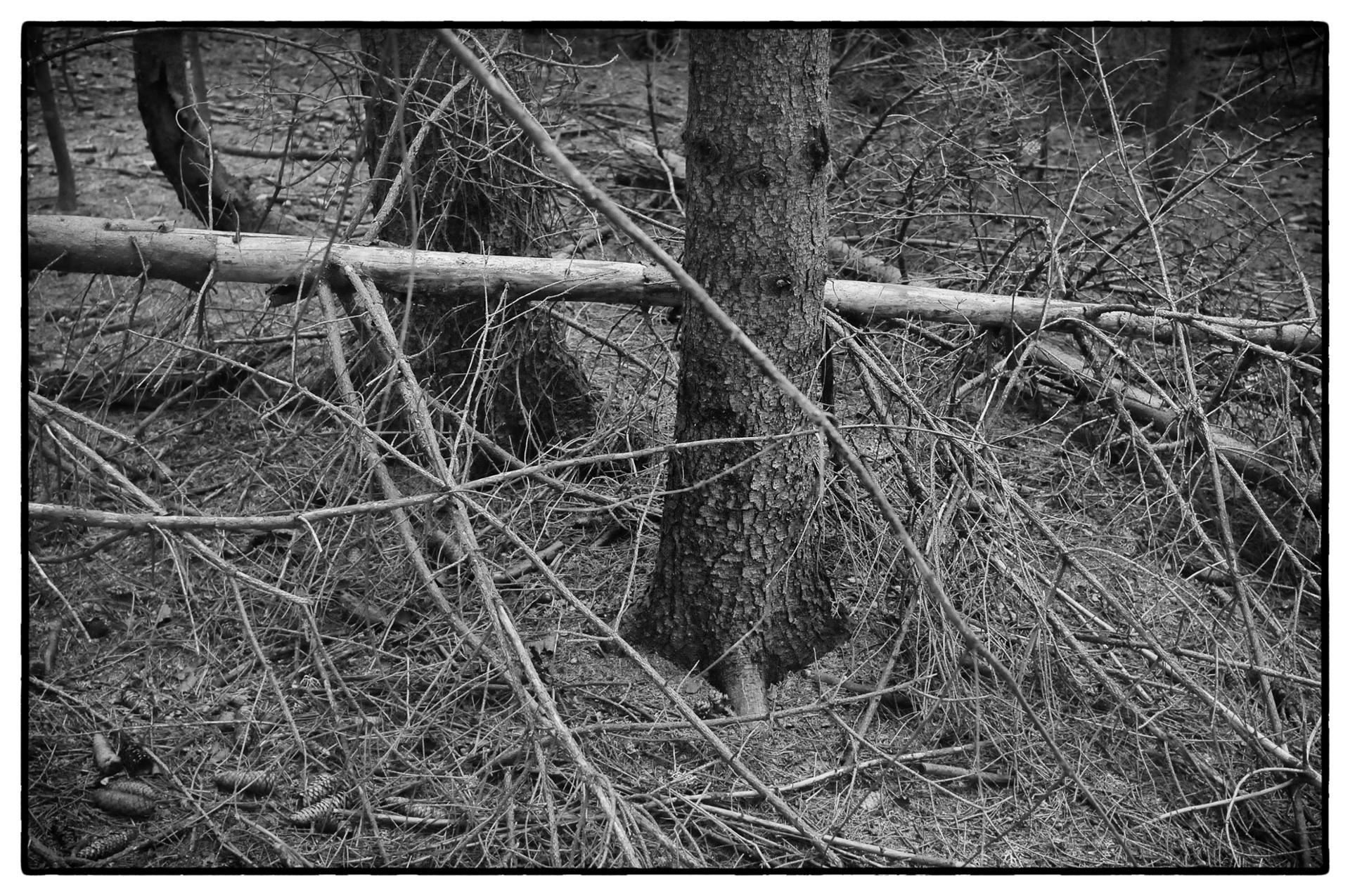 arbres 28