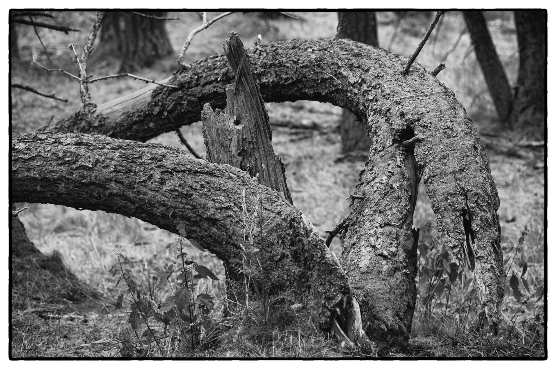arbres 53
