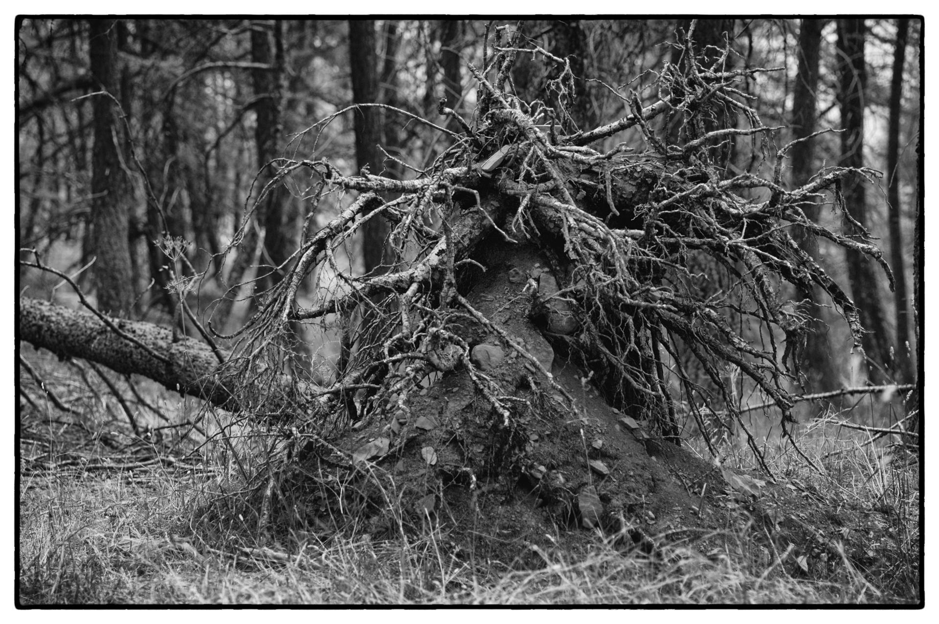arbres 54