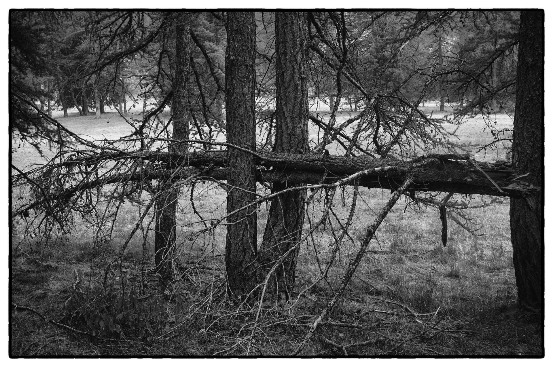 arbres 55