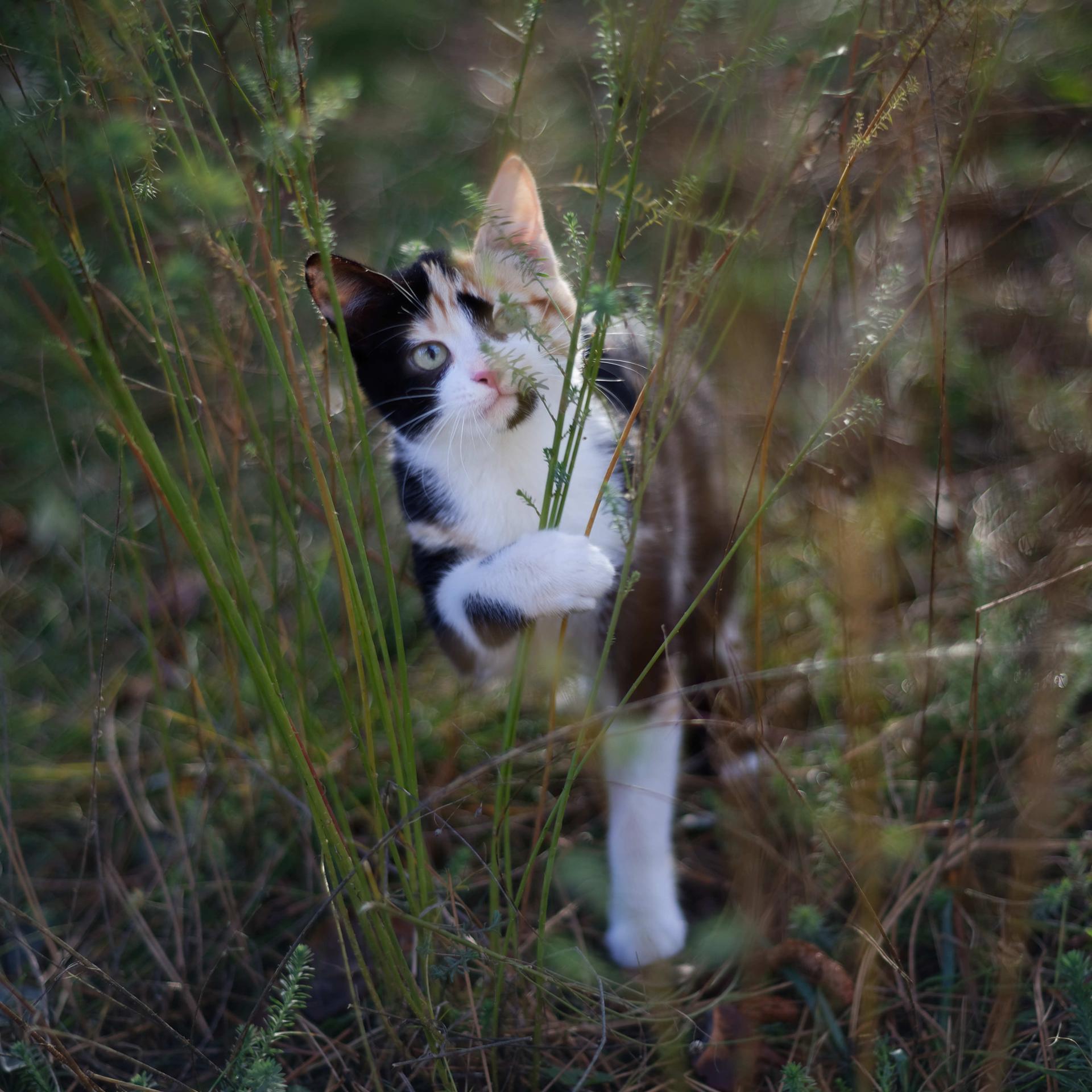 cat 33