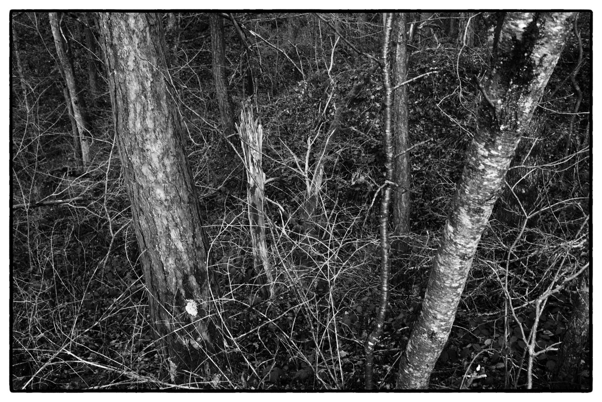 arbres 58