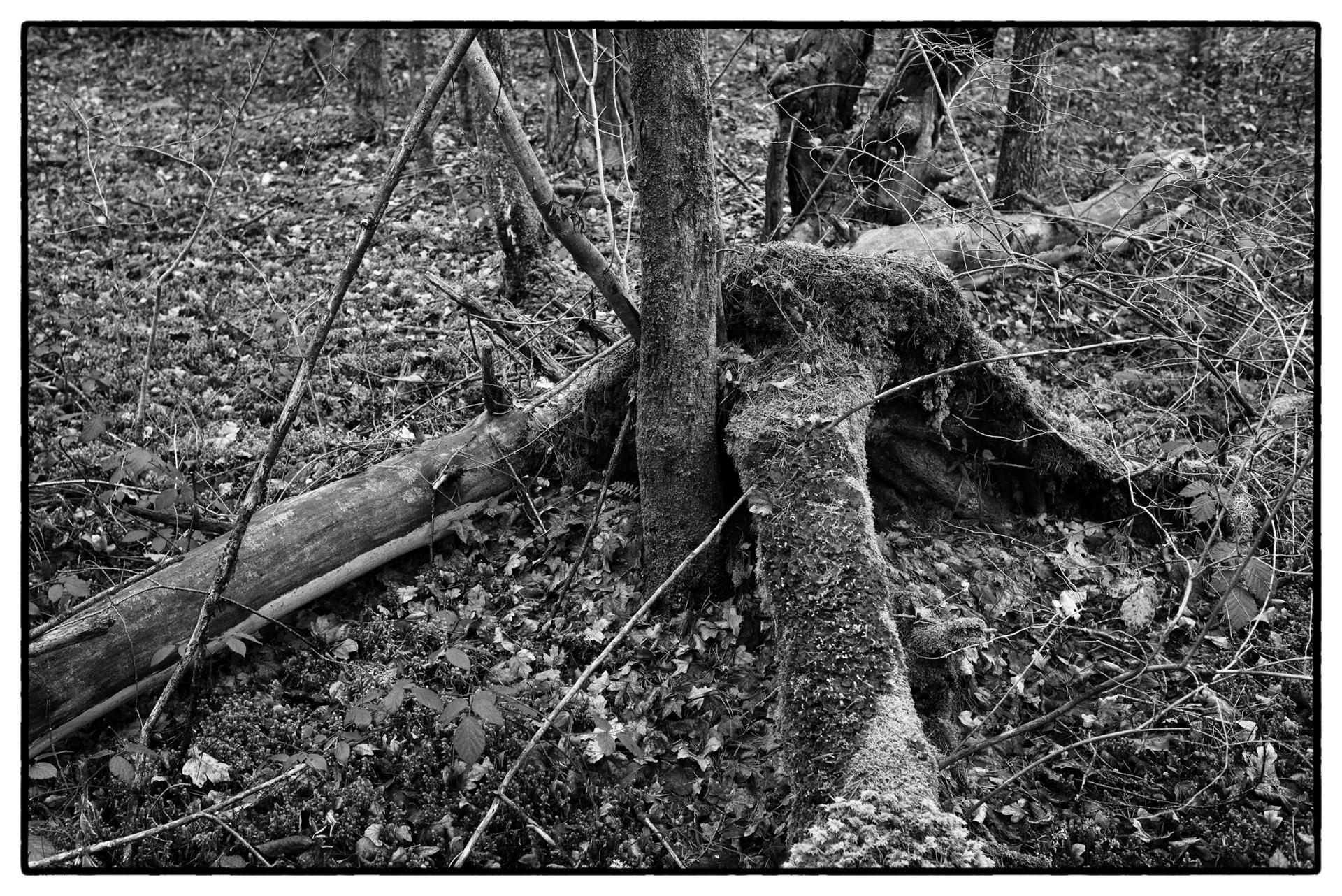 arbres 59