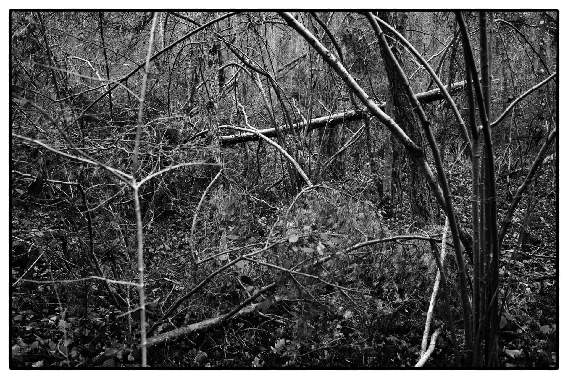 arbres 60