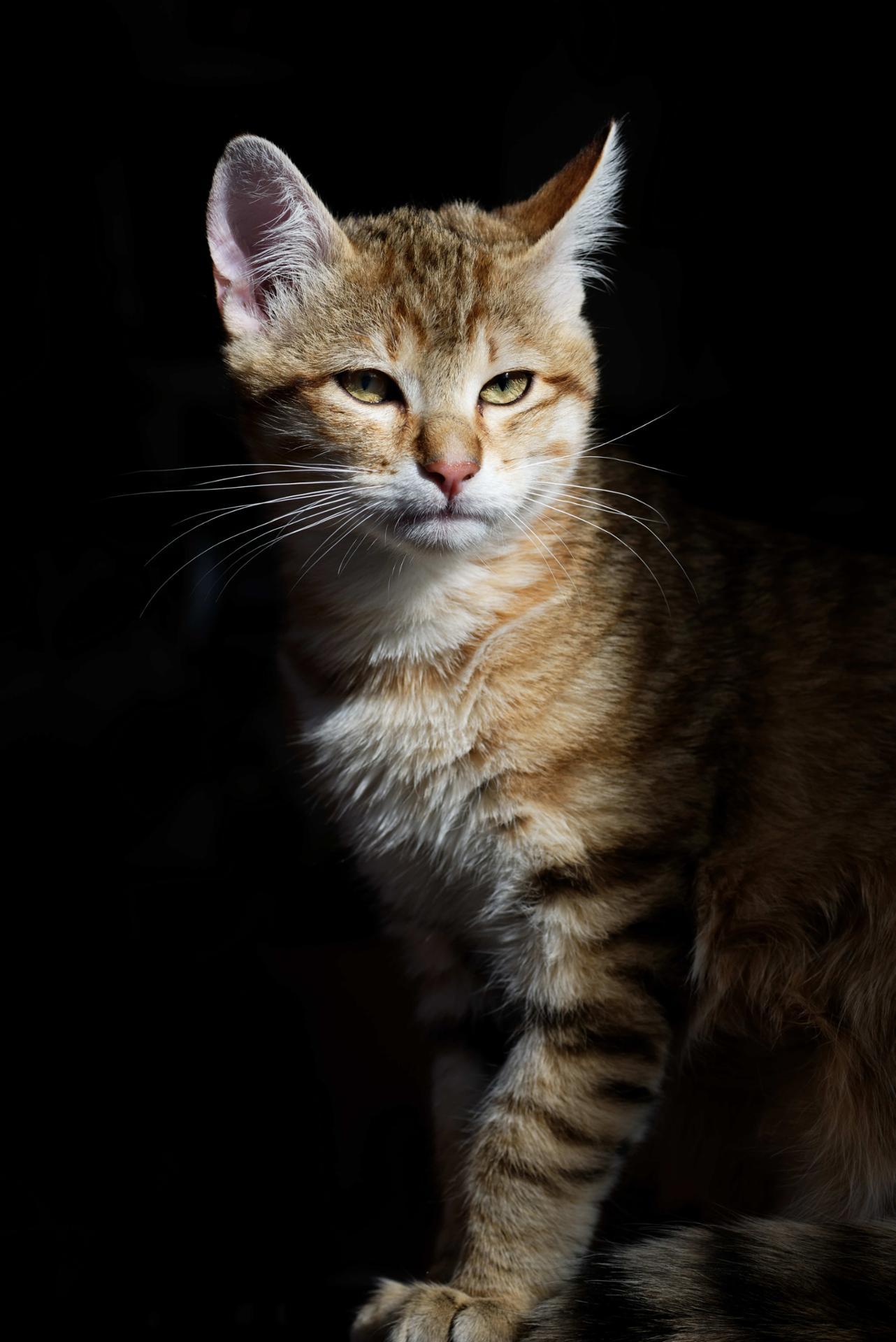 cat 34