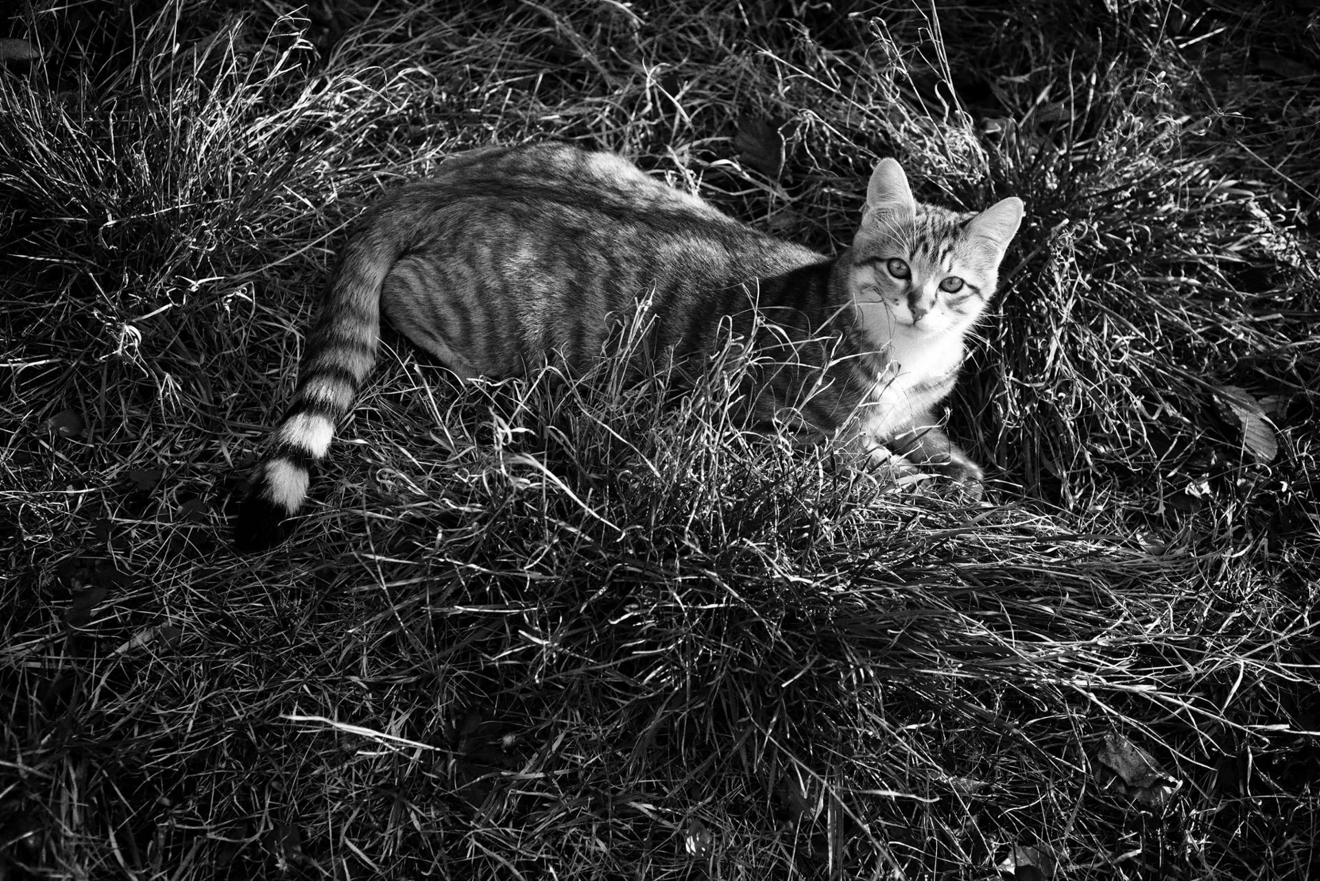 cat 35
