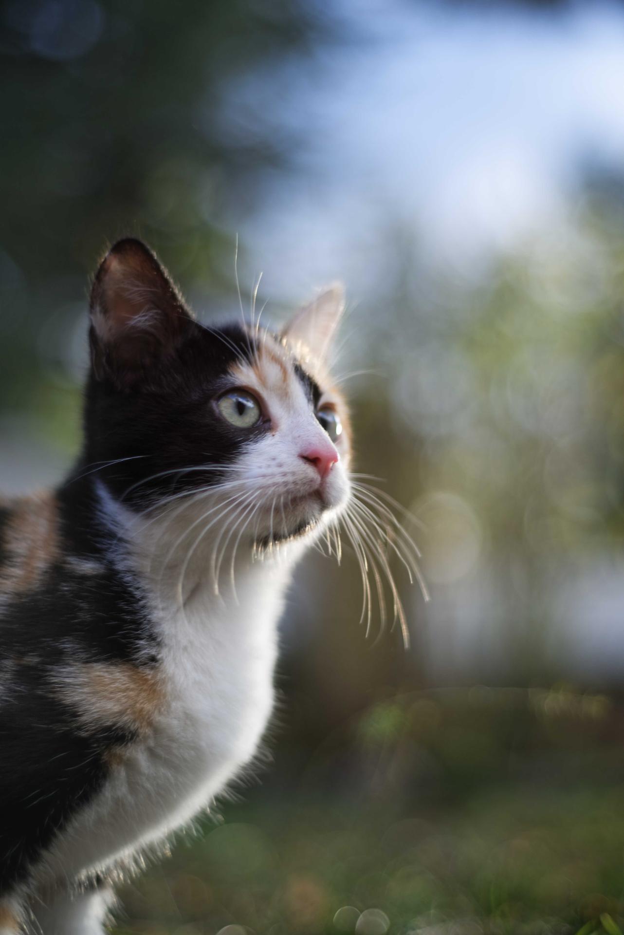 cat 36