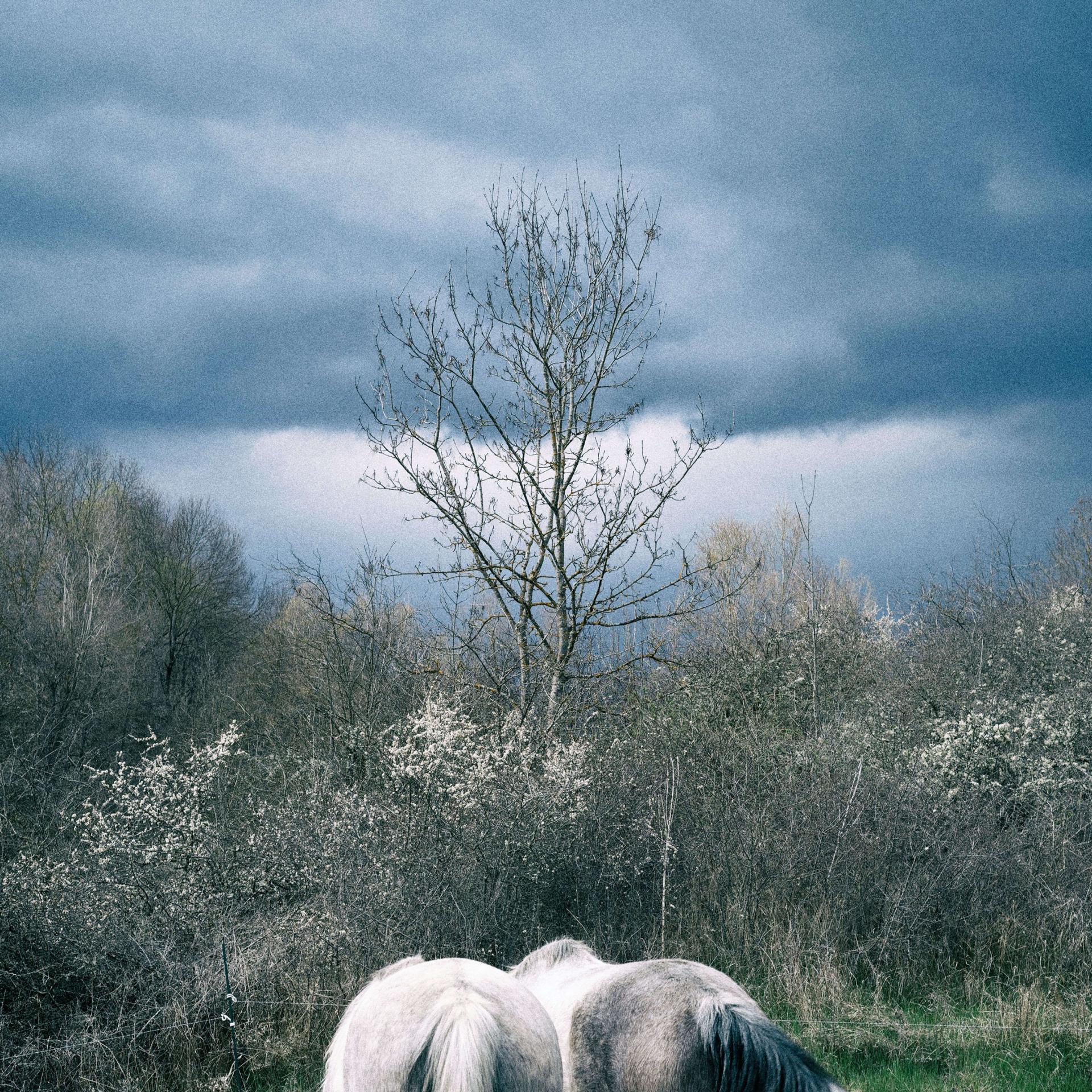 wild horses 12