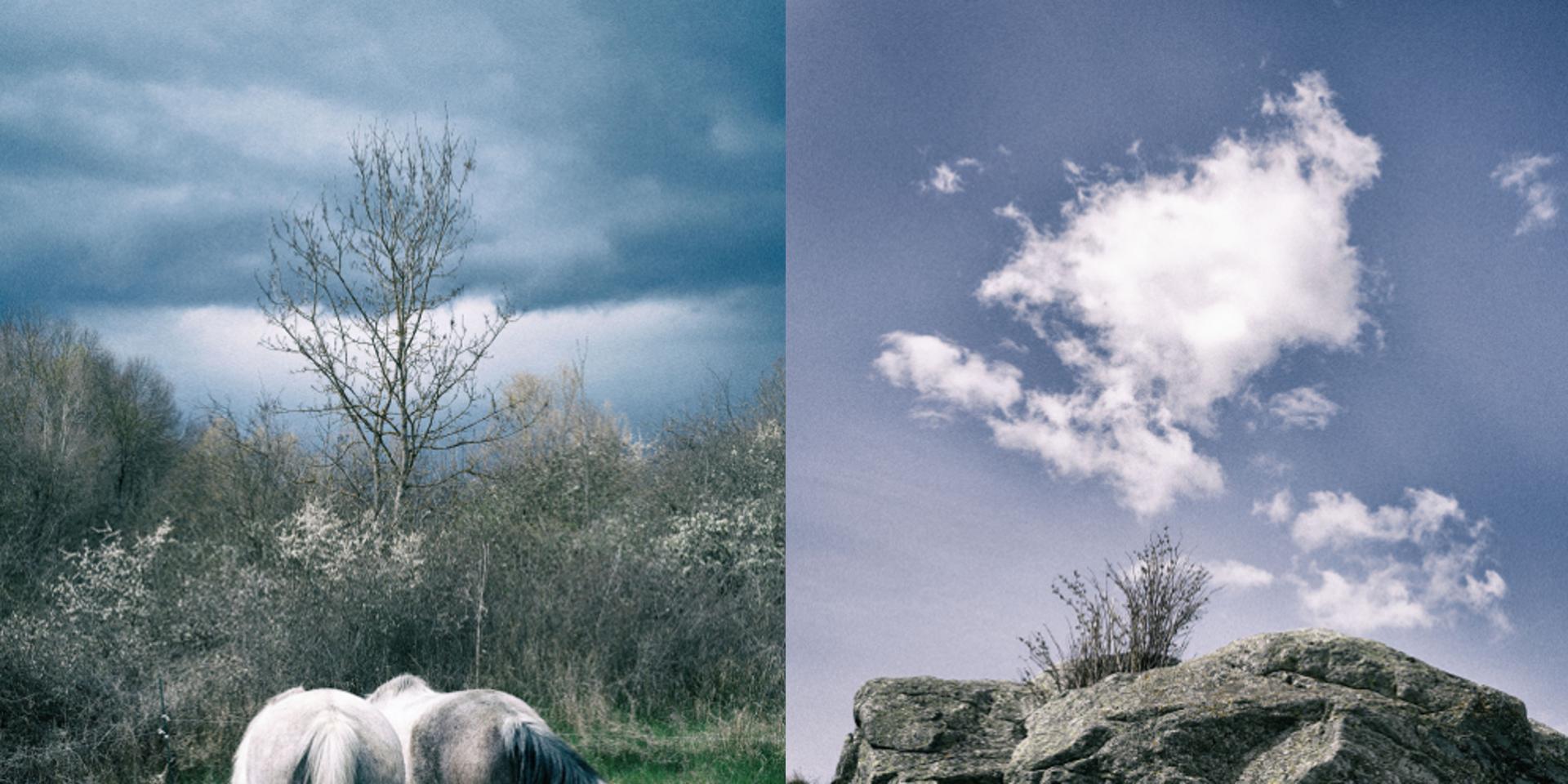 pierre feuille chevaux