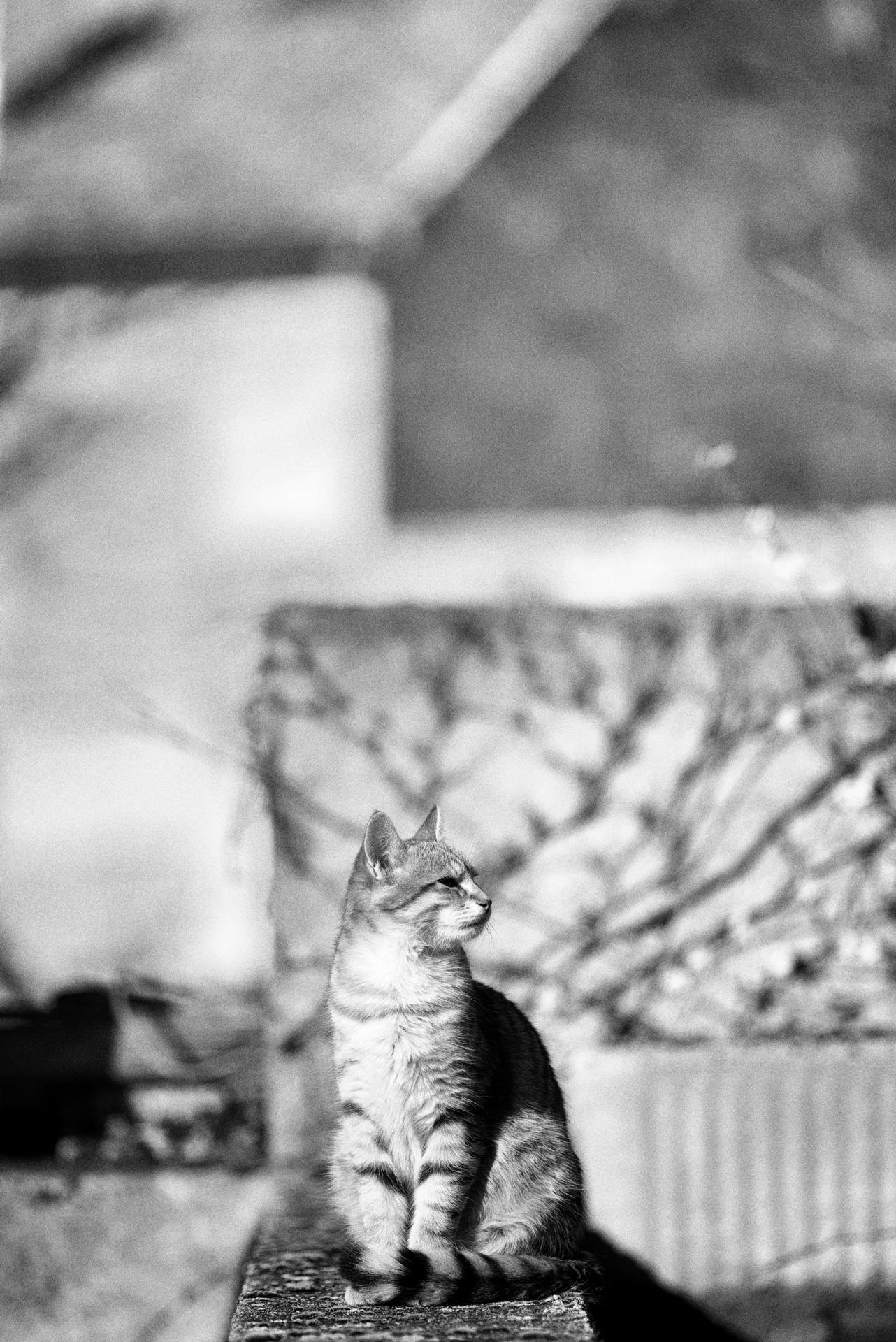 cat 39