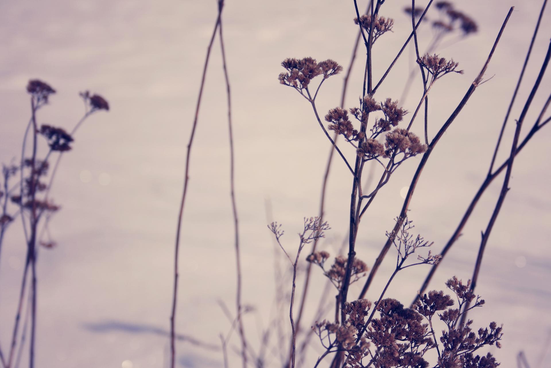 Purple herbes