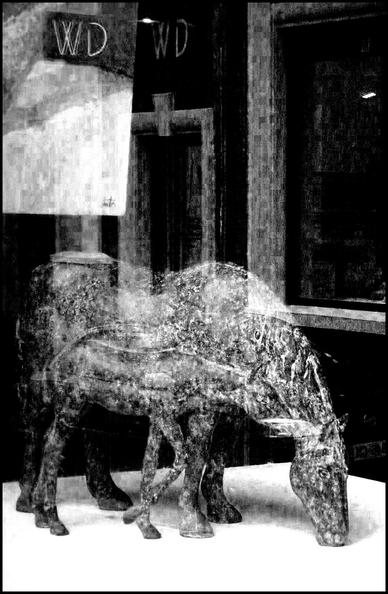 Horses ...