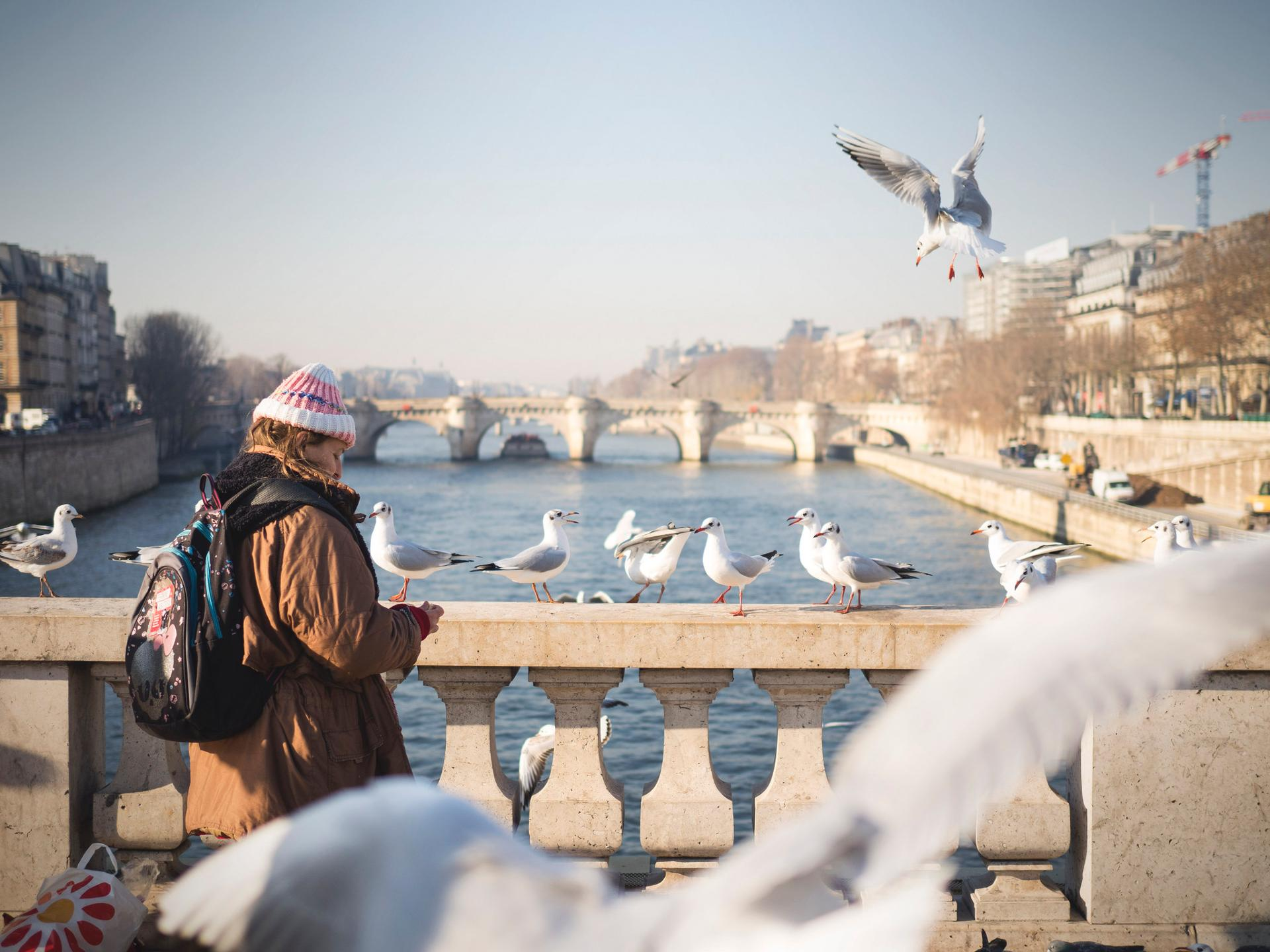 Les mouettes parisiennes