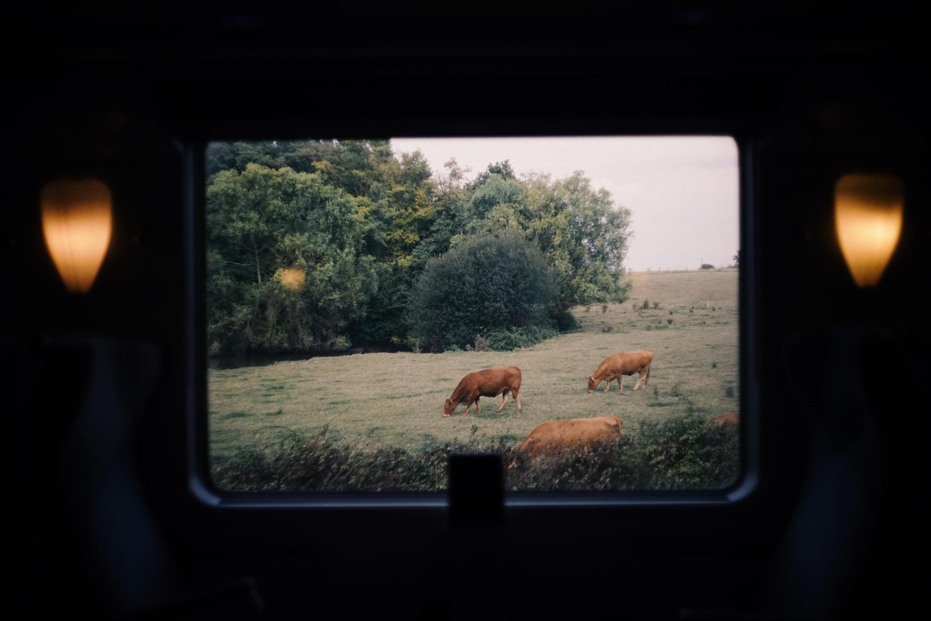 Le Train Vache