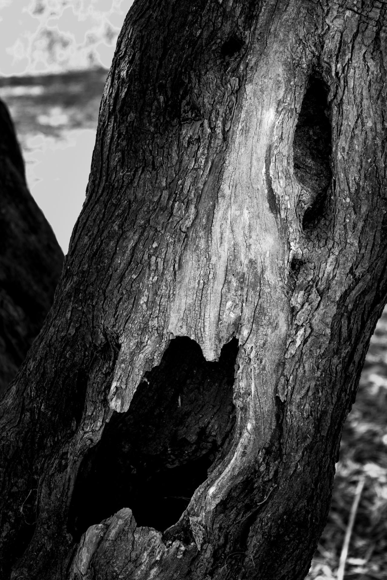 Le cri d'arbre