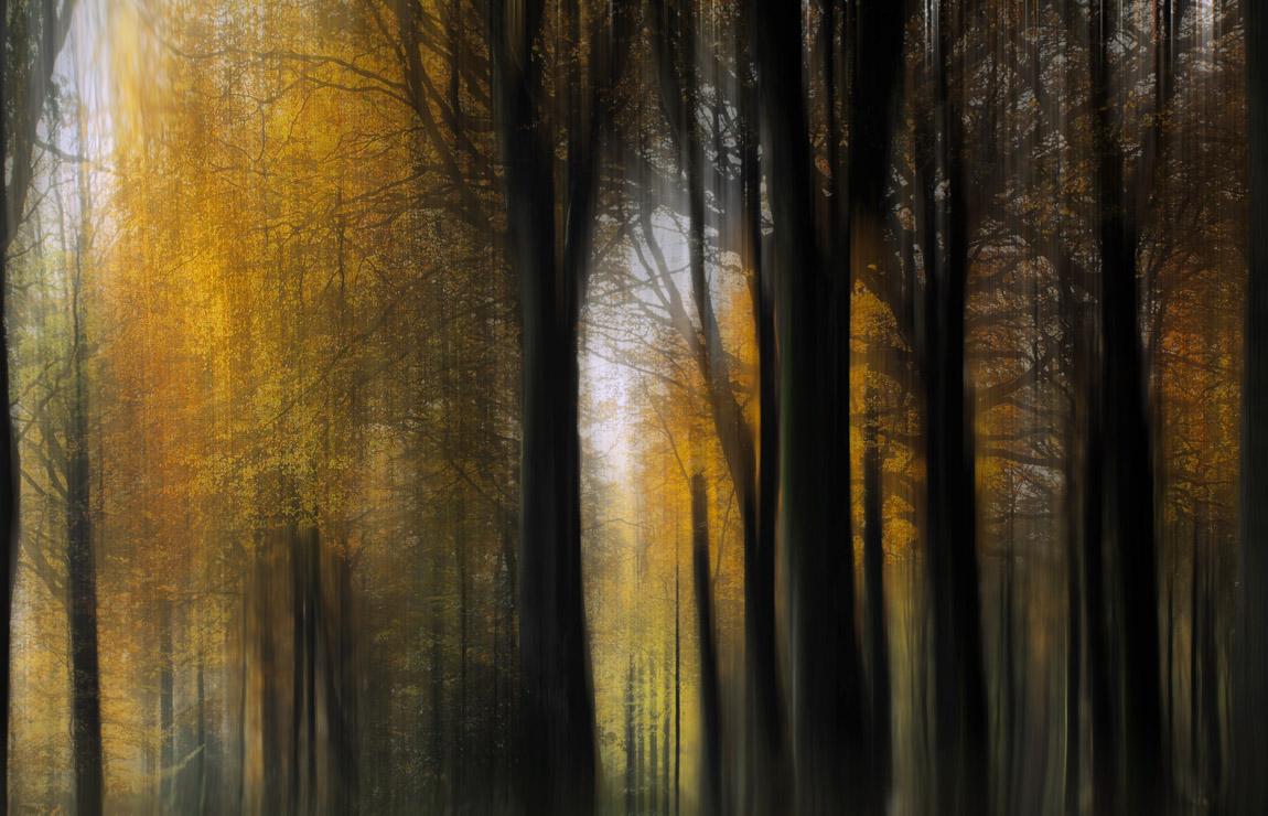 la forêt de mes songes