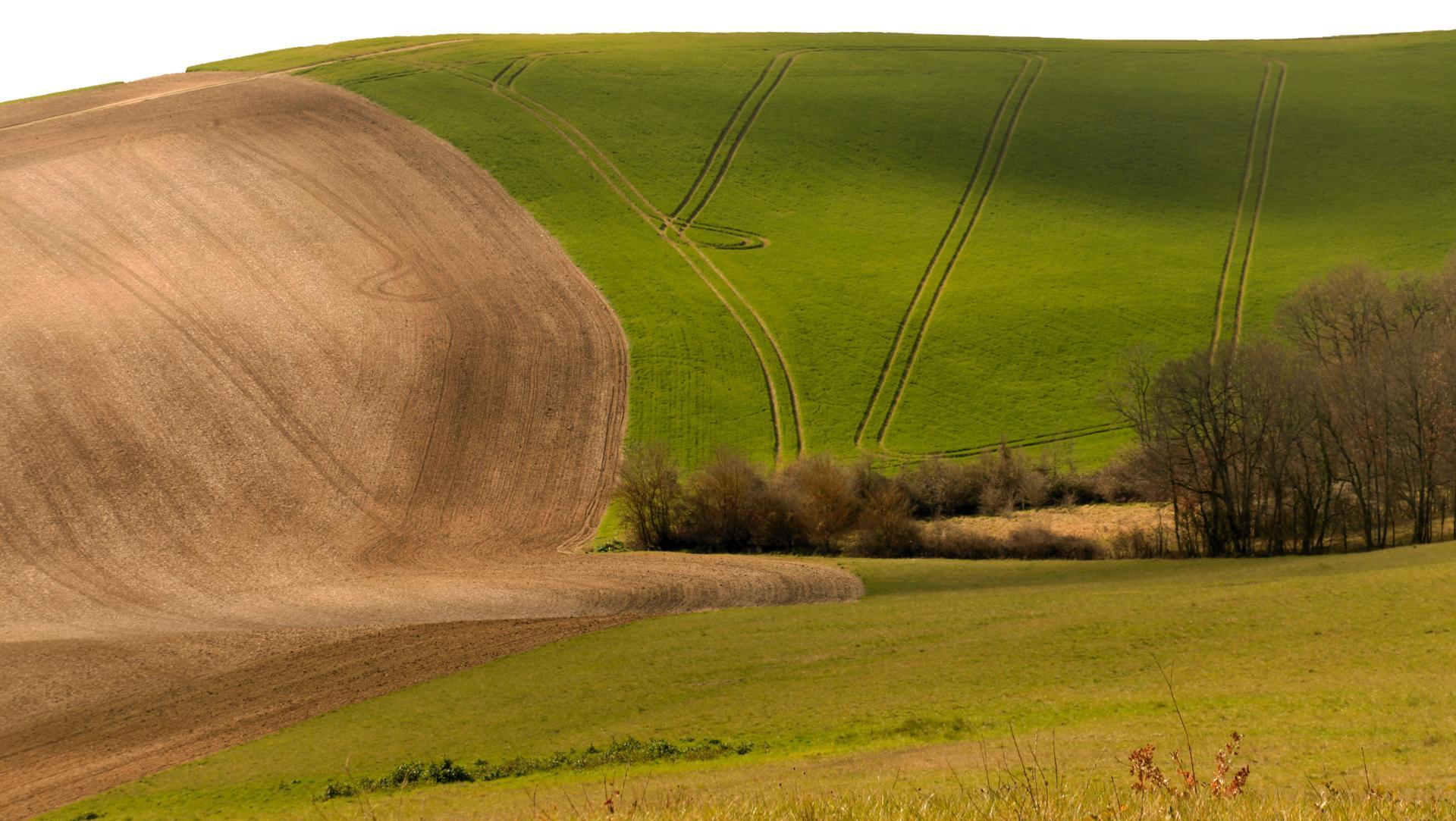 champs de printemps