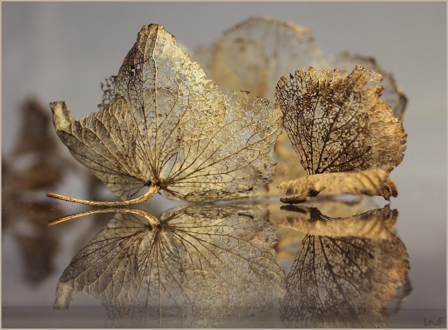 le miroir aux dentelles florales