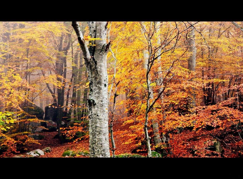 Fire of autumn
