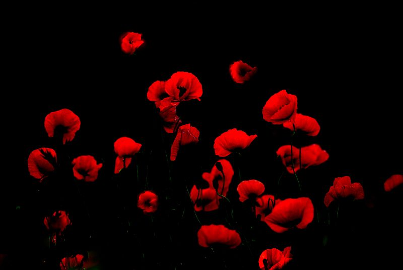 Flying poppies