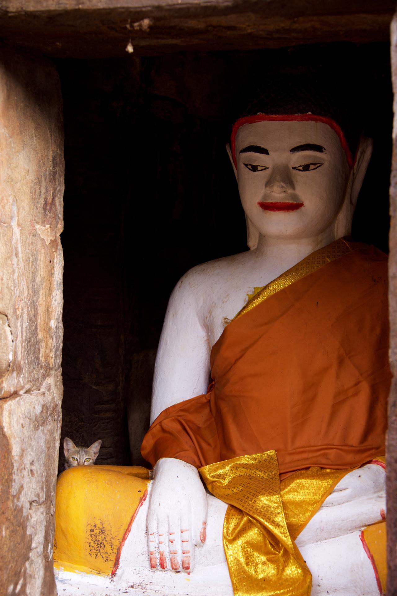 Le Chat de Bouddha
